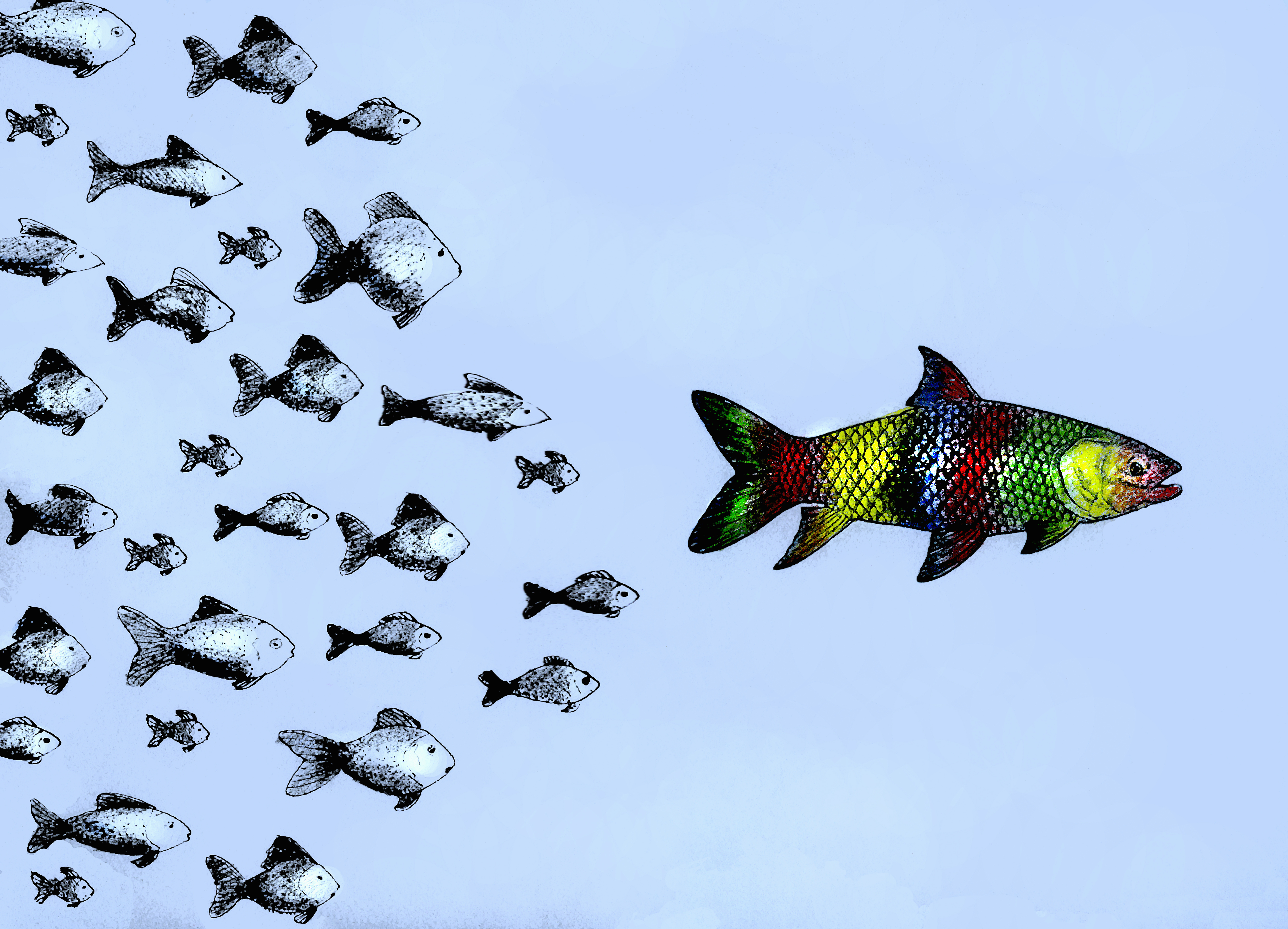 Small fish following large multicolored fish