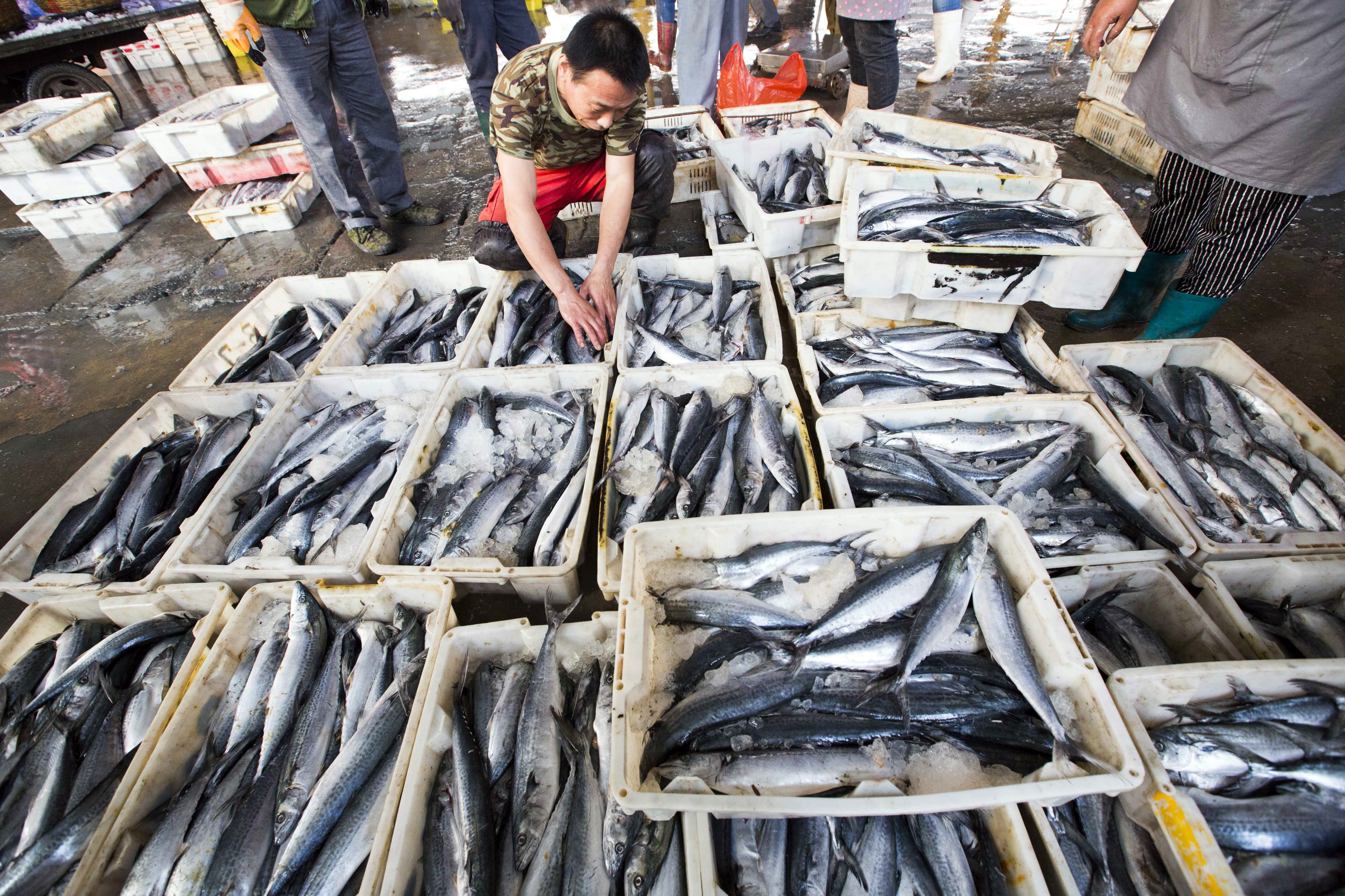 CHINA-ECONOMY-INFLATION-SEAFOOD