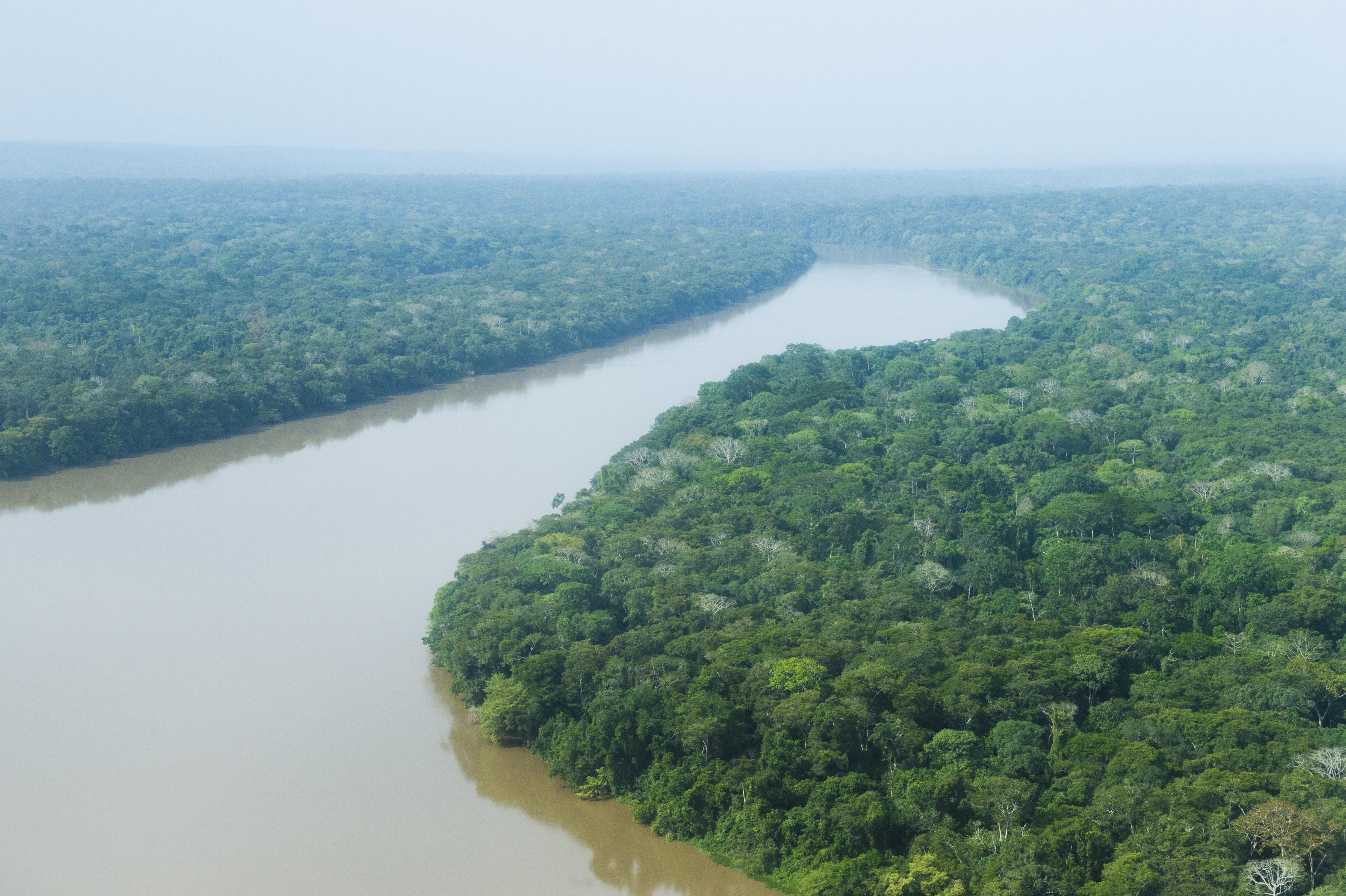 Rainforest around Sangha-River