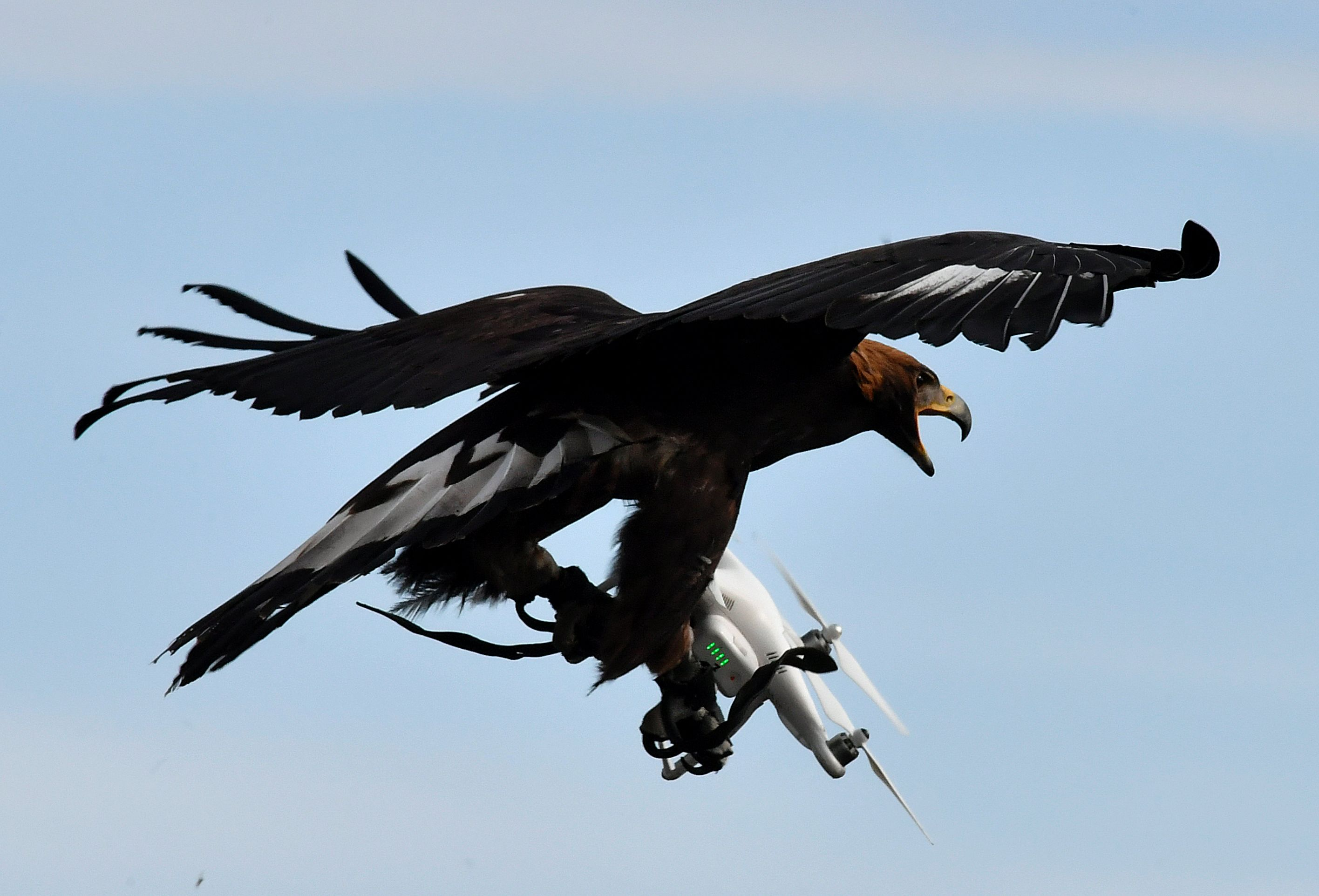 FRANCE-Drones-eagles