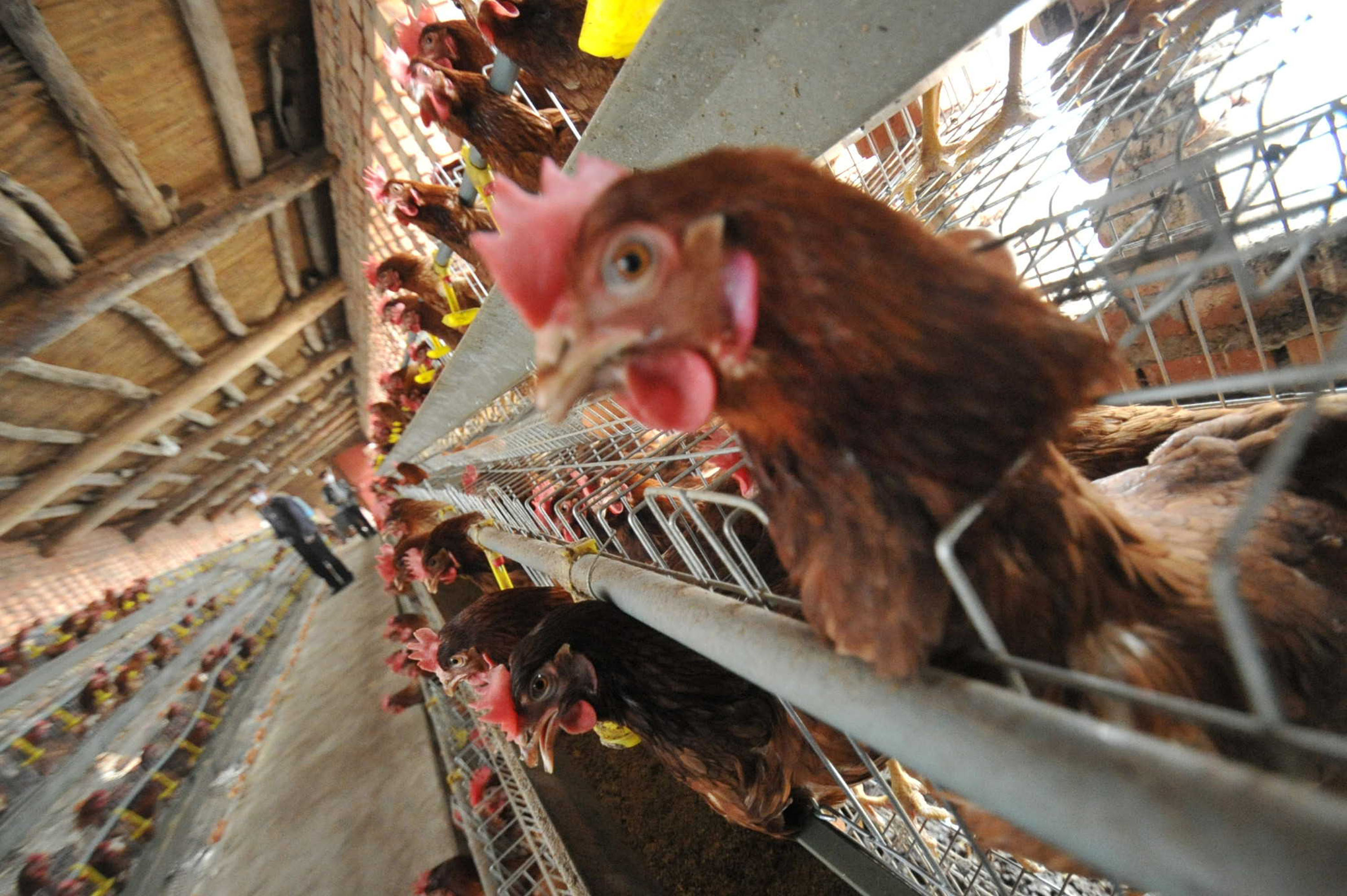 87 H7N9 Bird Flu Cases Confirmed In China