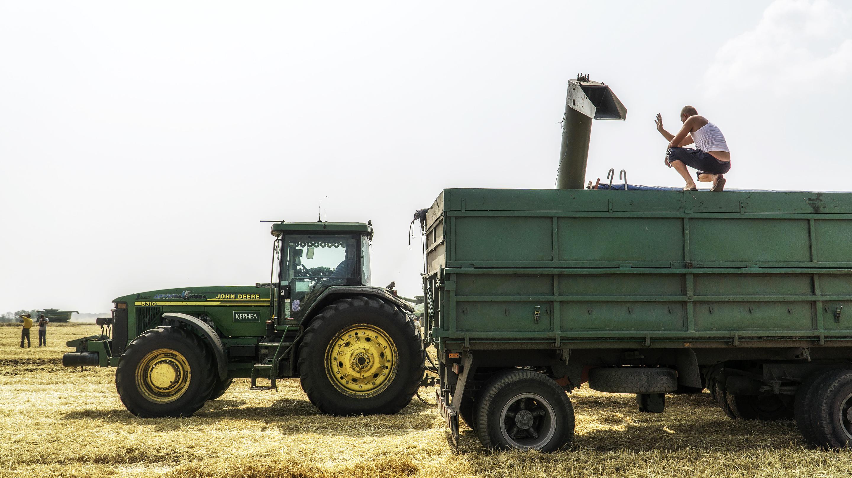 Summer Wheat Harvest In Ukraine
