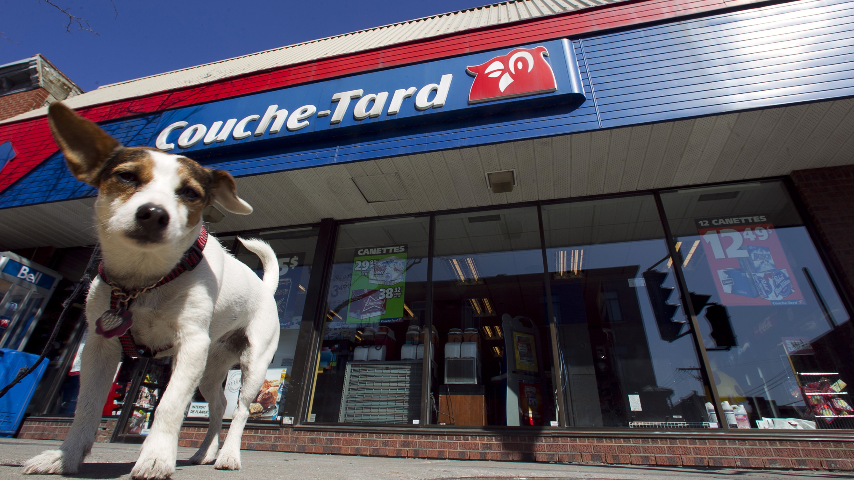 A dog named Roxy waits outside a Couche-Tard convenience store in Montreal