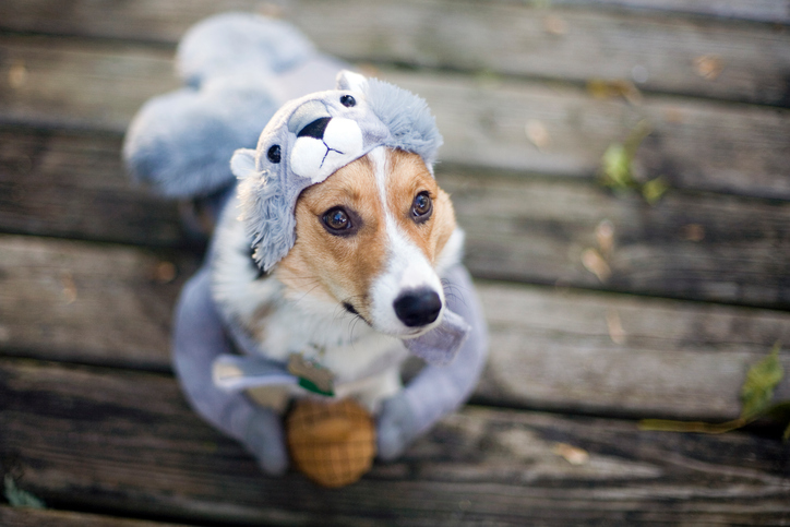 Dog in squirrel costume