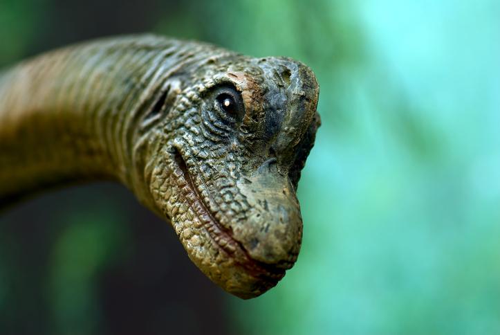 Dinosaur Face