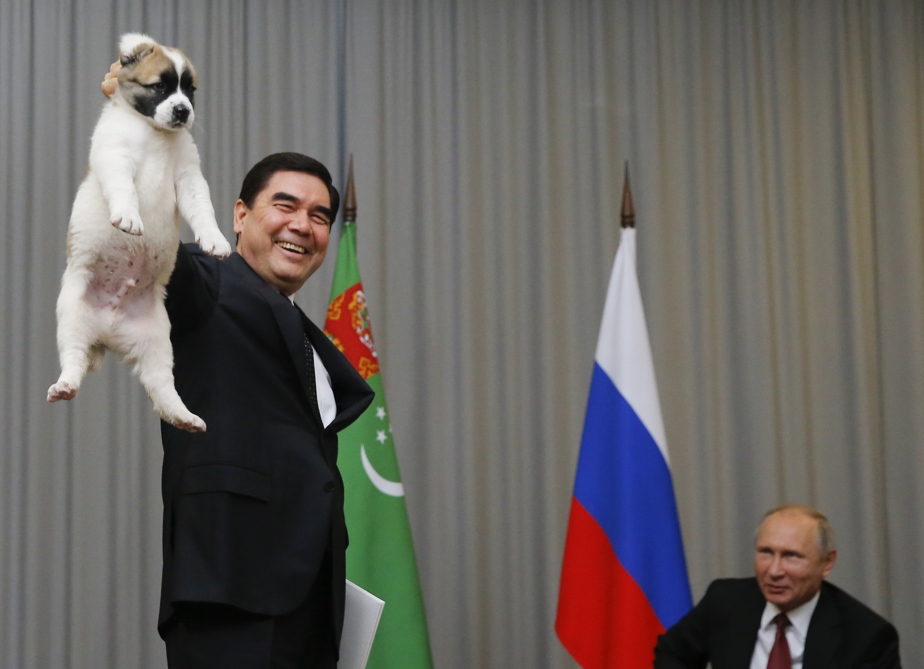 Photos Vladimir Putin Plays With New Puppy And Other Cuddly Pets Fortune