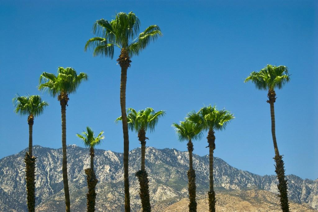 USA, California, Palm Springs, palms and mountains