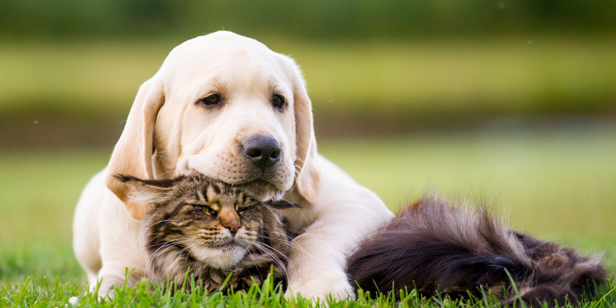 Who's Smarter, Dogs or Cats? Science Now Has the Answer