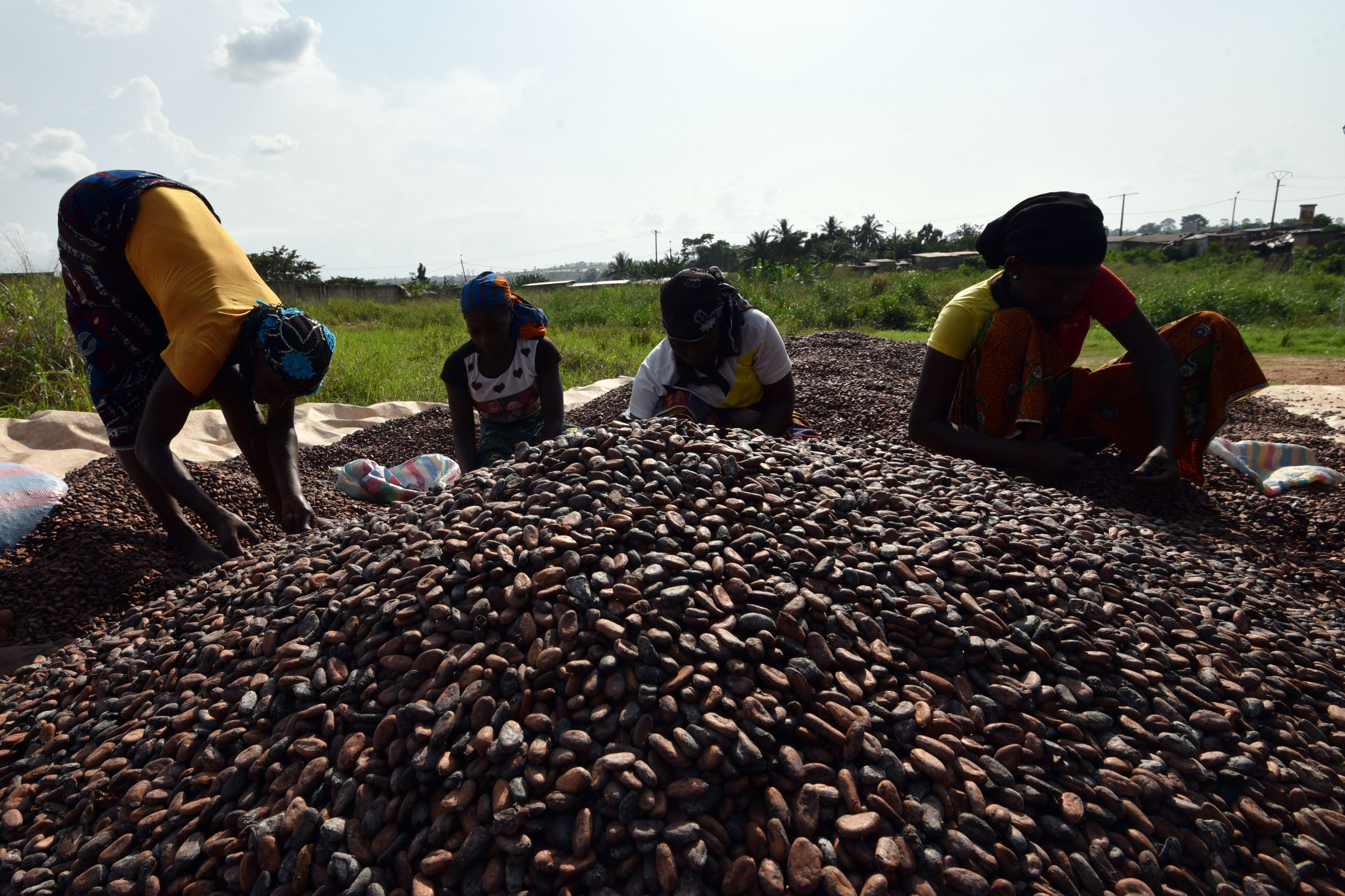 Women sort out cacao beans in Soubre, Ivory Coast on March 6, 2017.