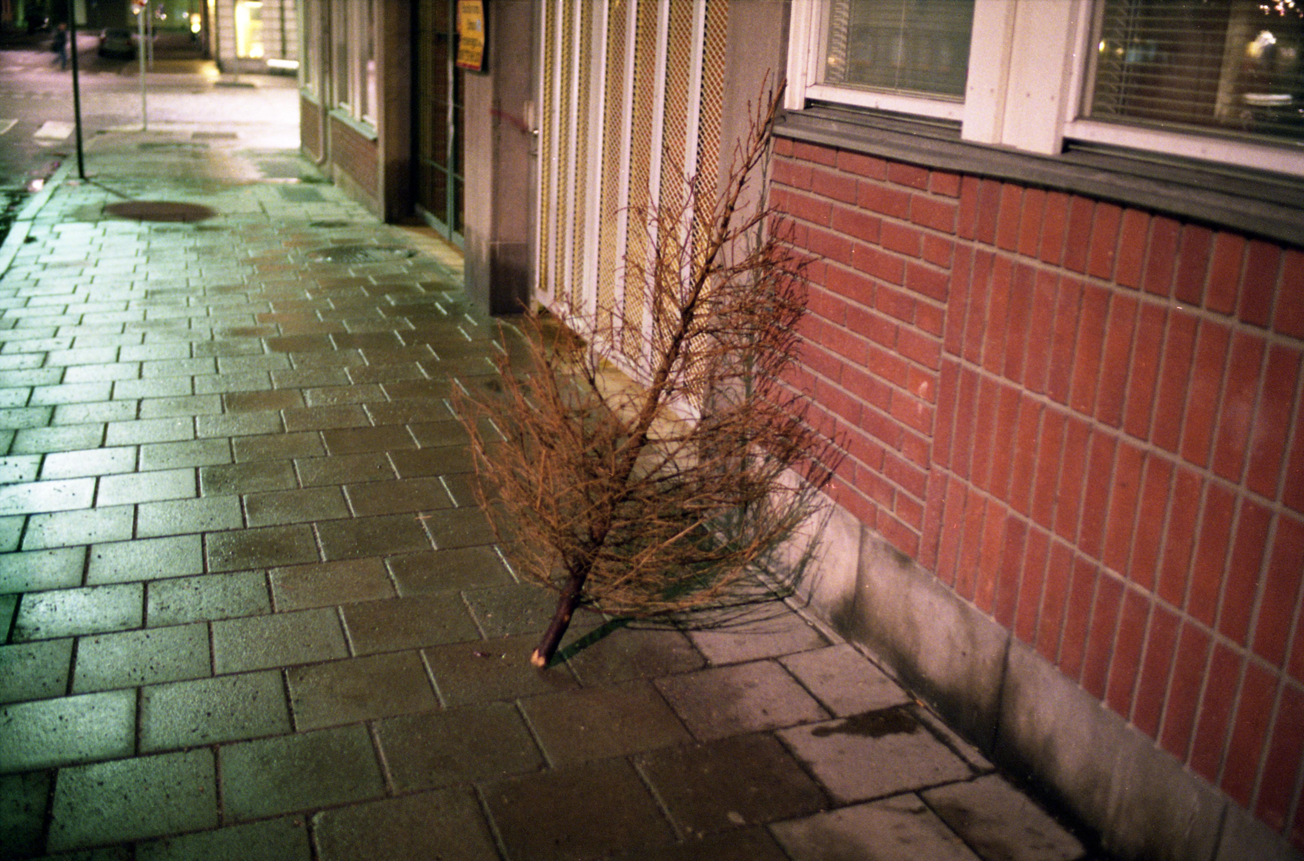Slim Christmas Tree Costco