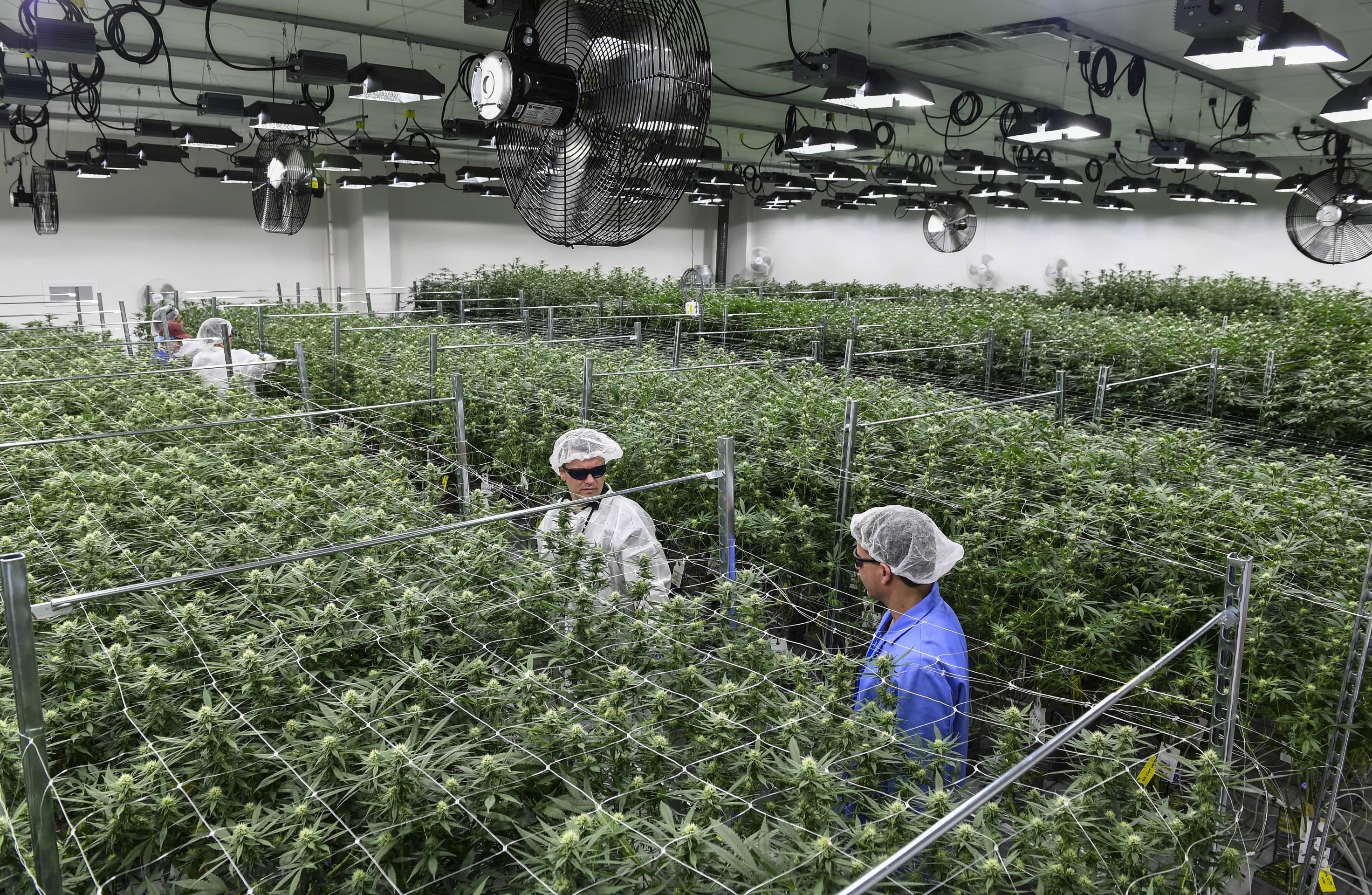 Medical Marijuana in Maryland