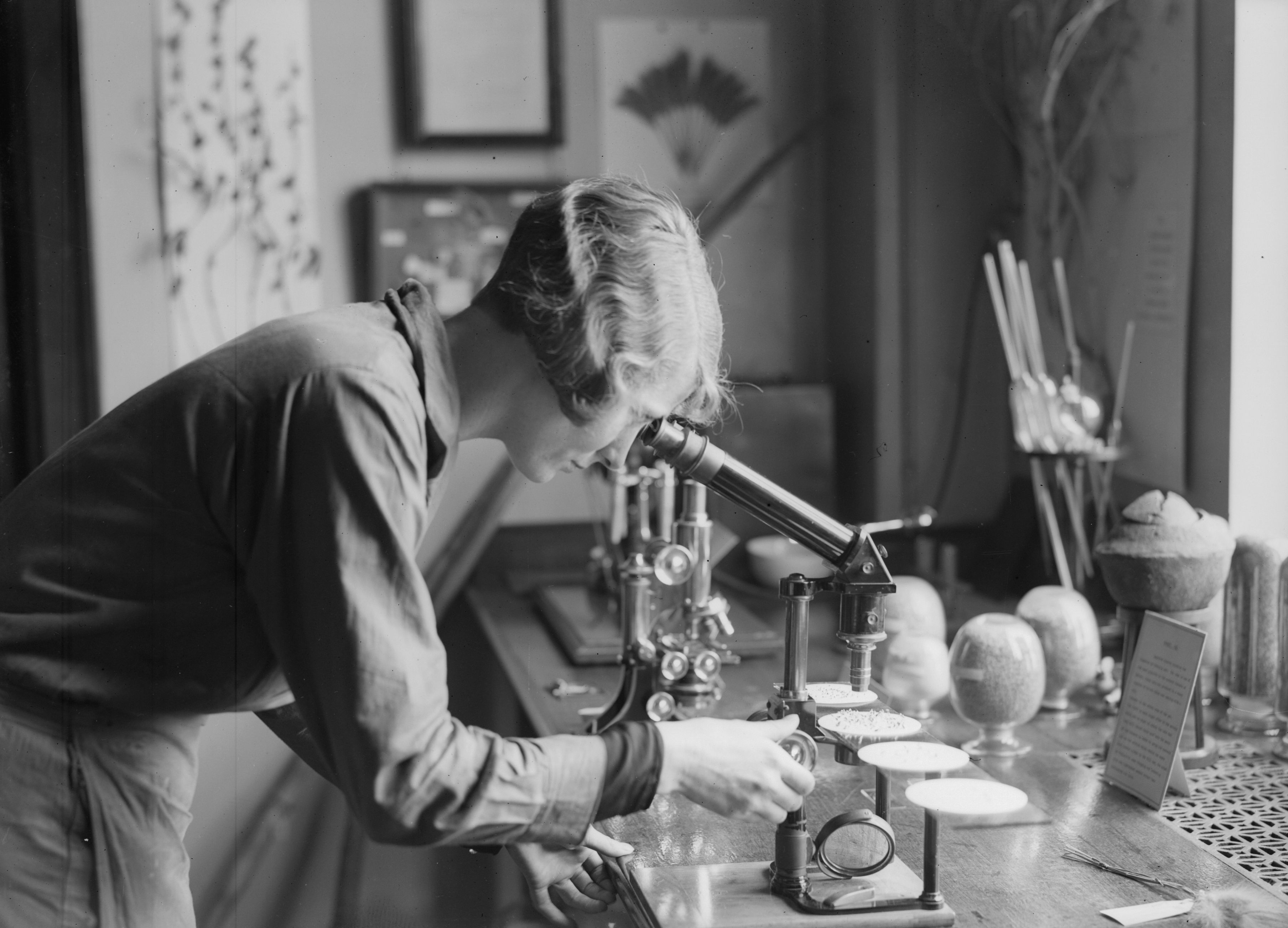 A woman bending over a microscope researching plants in a laboratory.