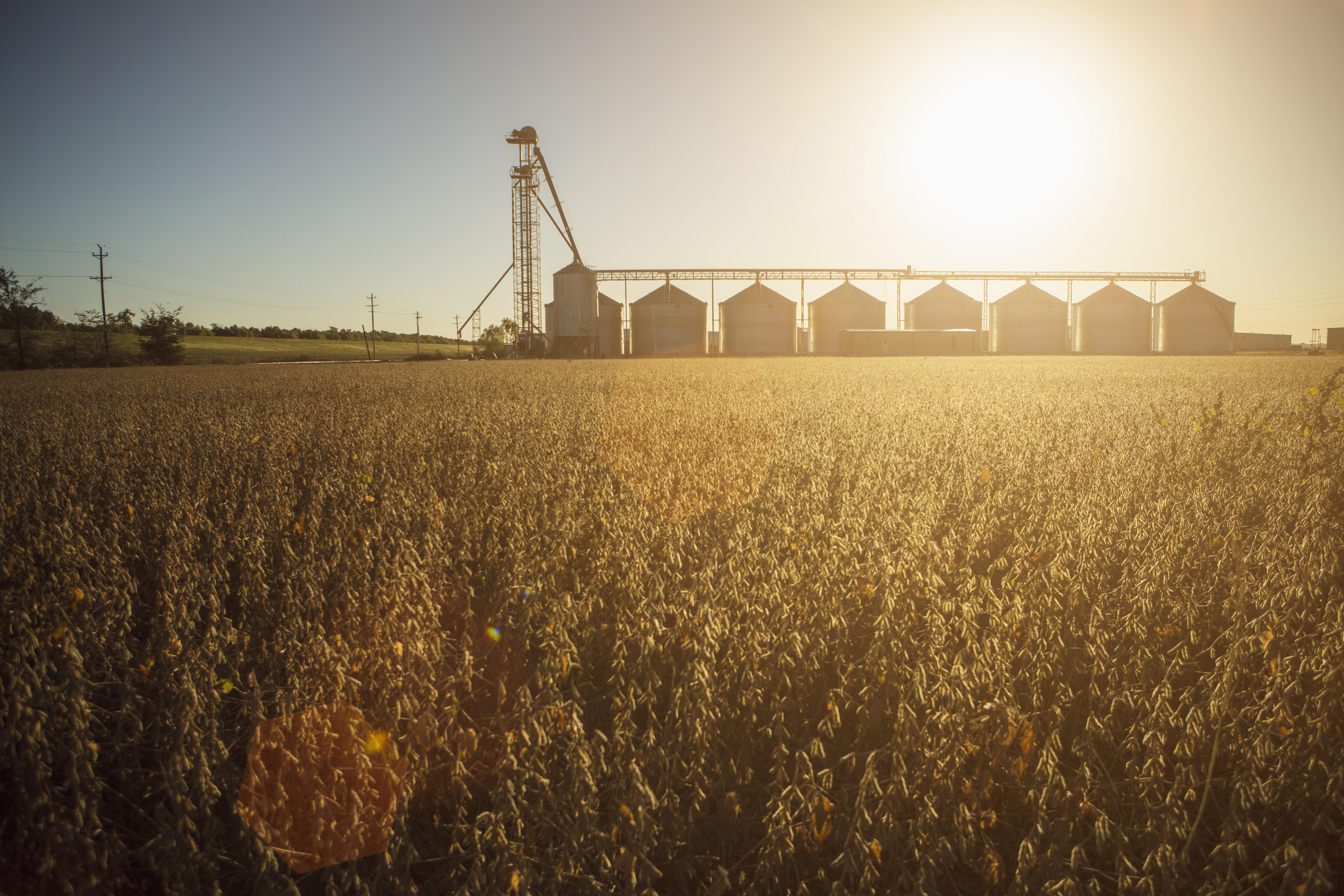 Silos and crops on a farm.