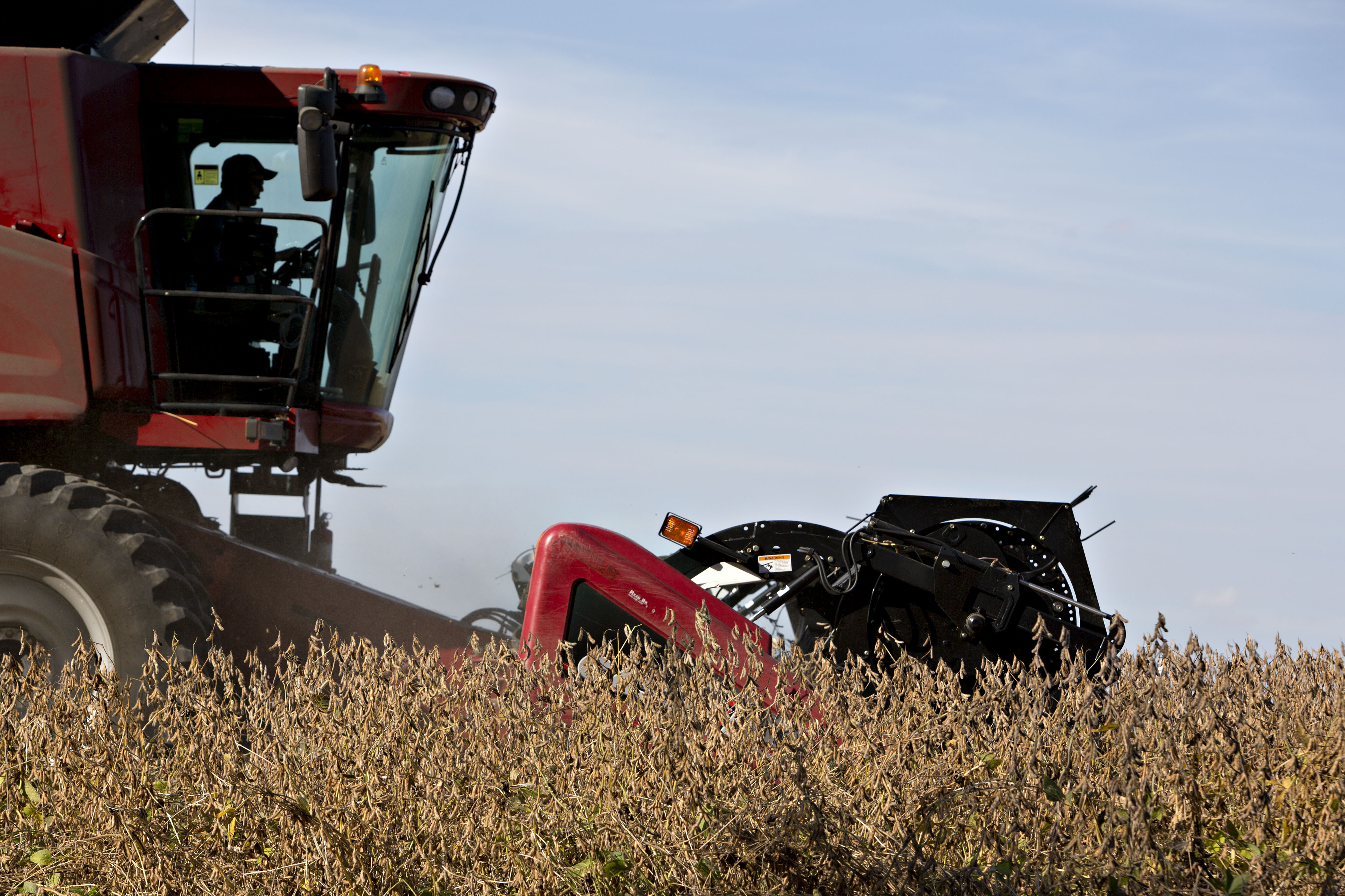 A farmer in tractor harvests soybeans in field.