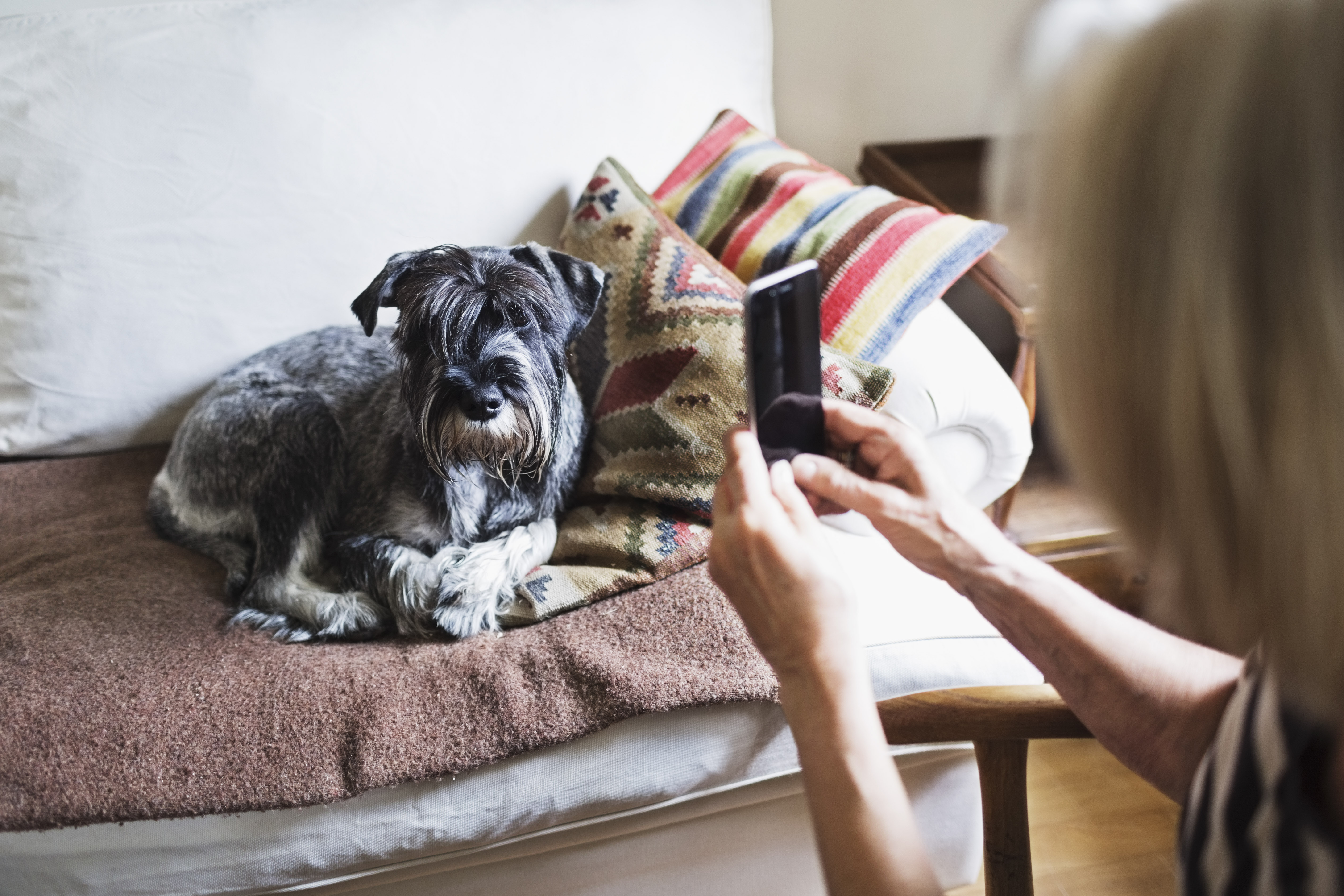 Cropped image of senior woman photographing dog through smart phone at home