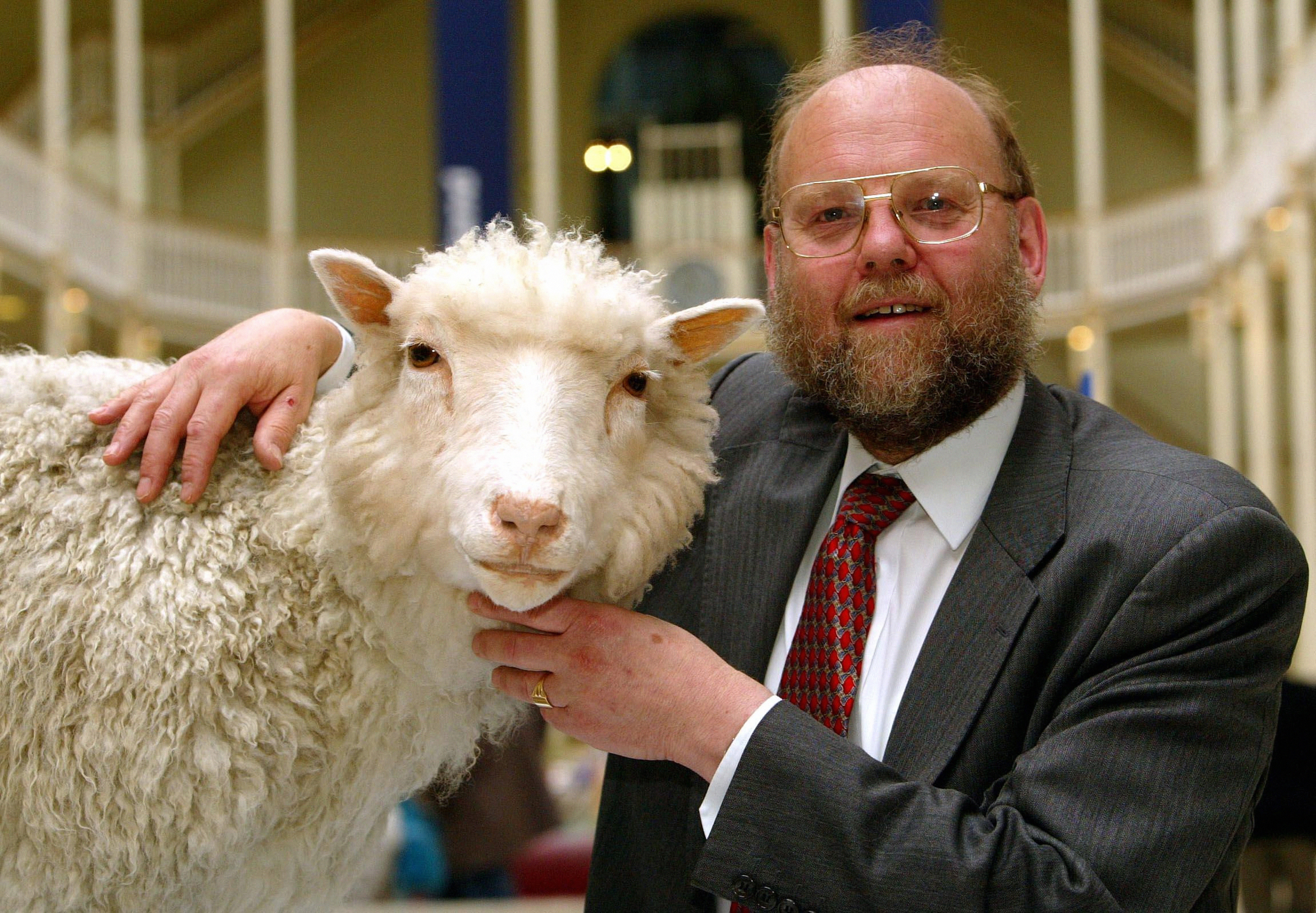 Dolly the Sheep - Preserved.