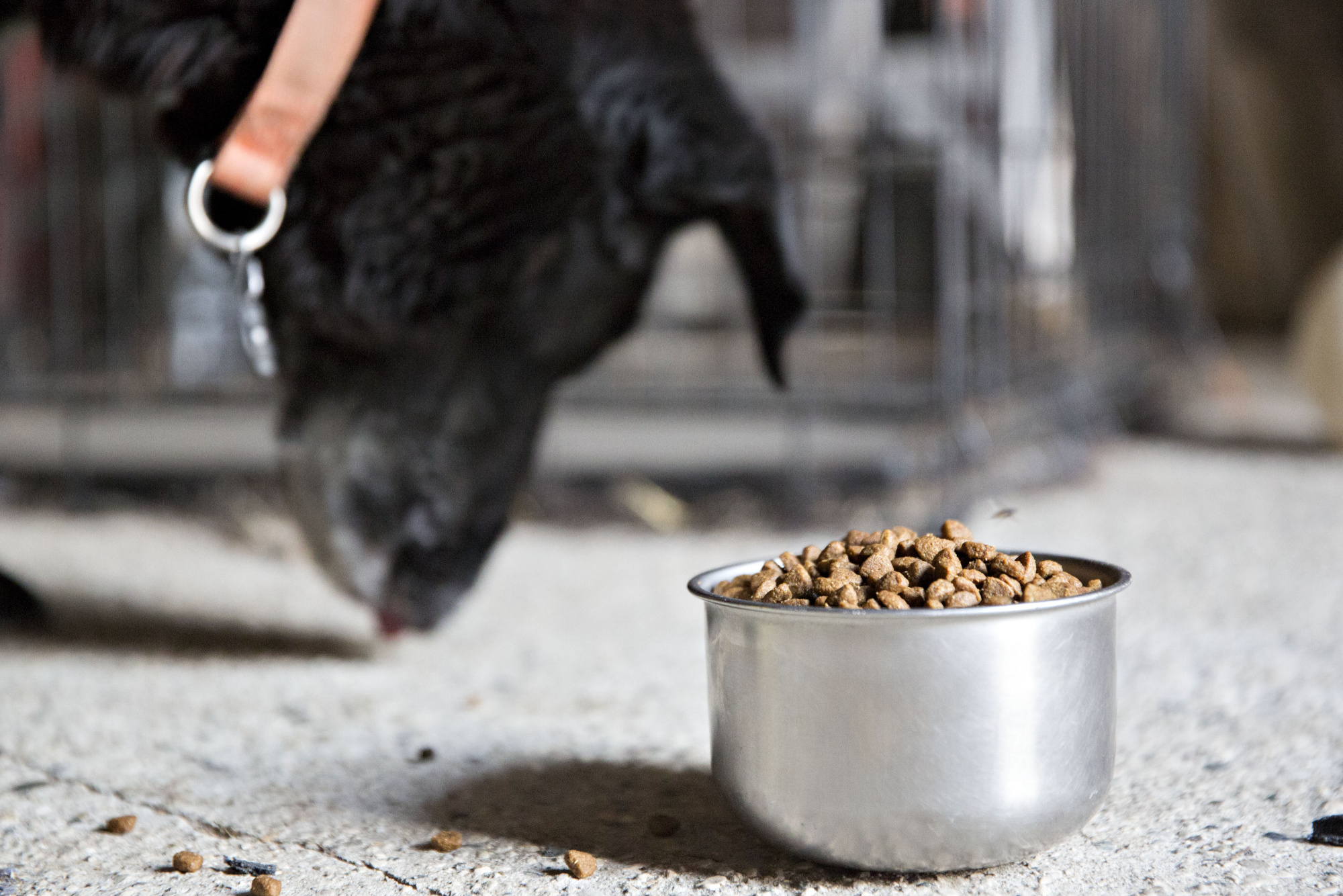 Amazon Launches Own Pet Product Brand, Wag; Starts With Food