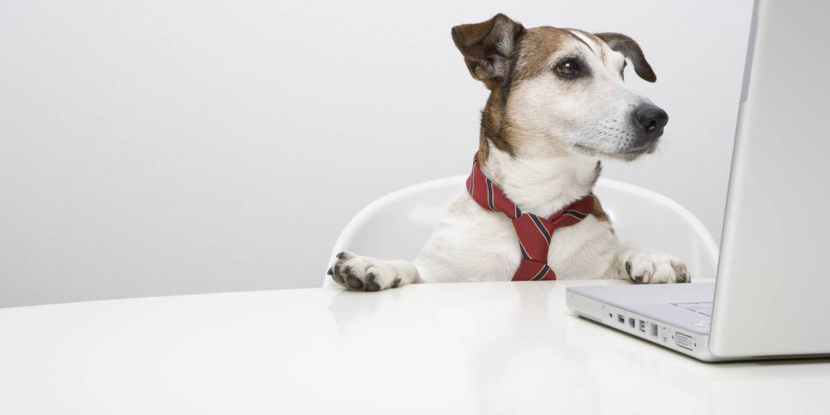 Take Your Dog to Work Day Is All Year at These Pet-Friendly
