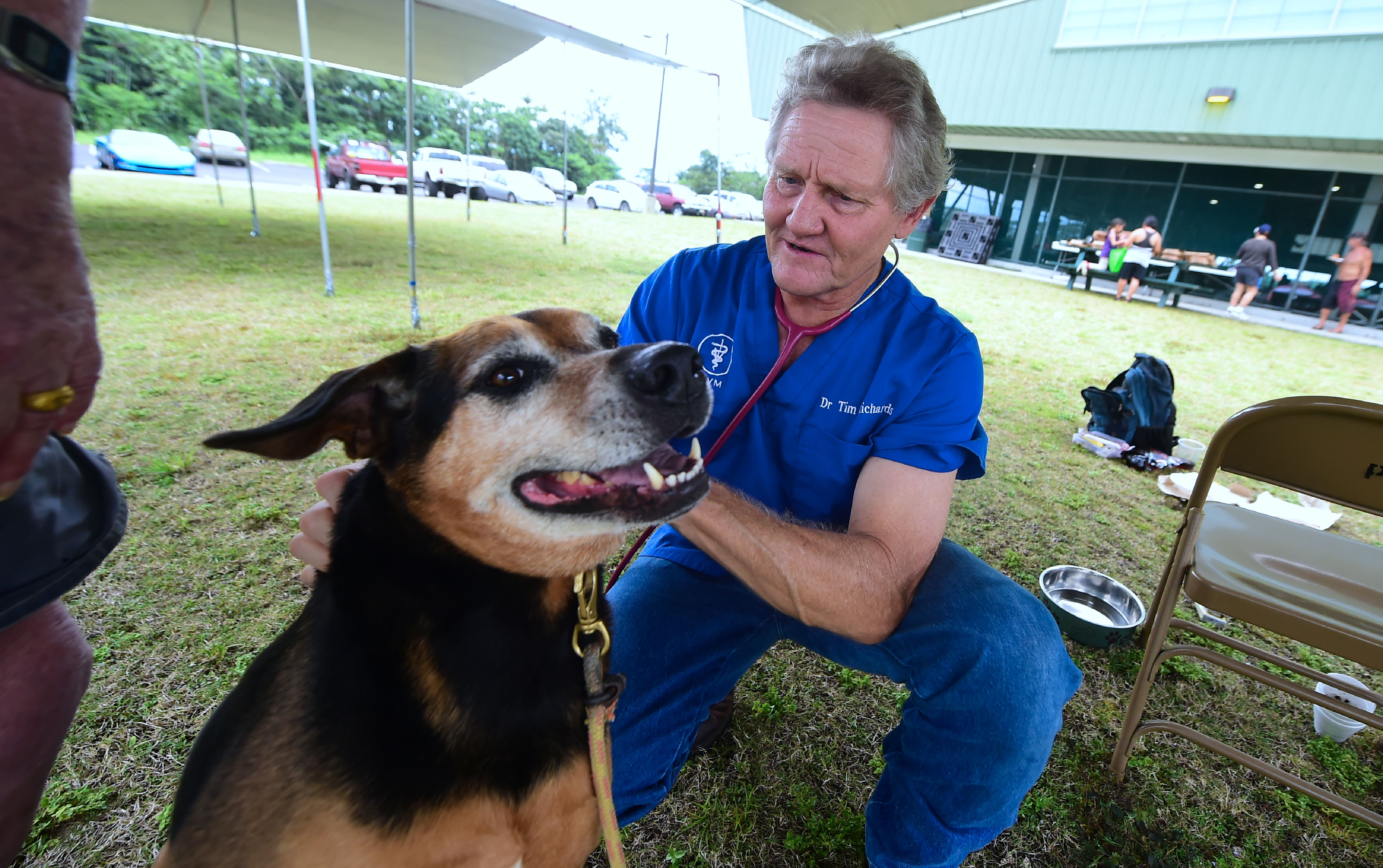 A veterinarian checks on a dog at the Pahoa Community Center in Hawaii.
