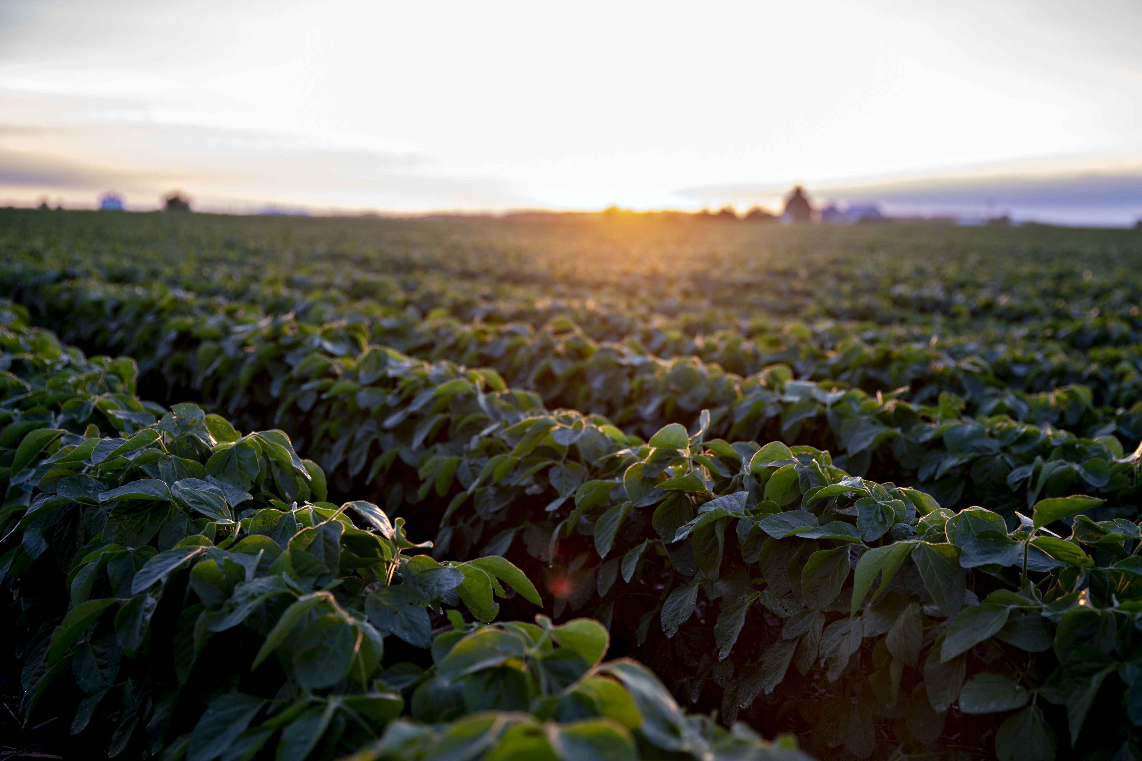 U.S. Soy Prices Are Crumbling as Trade War Sparks Brazil Rally