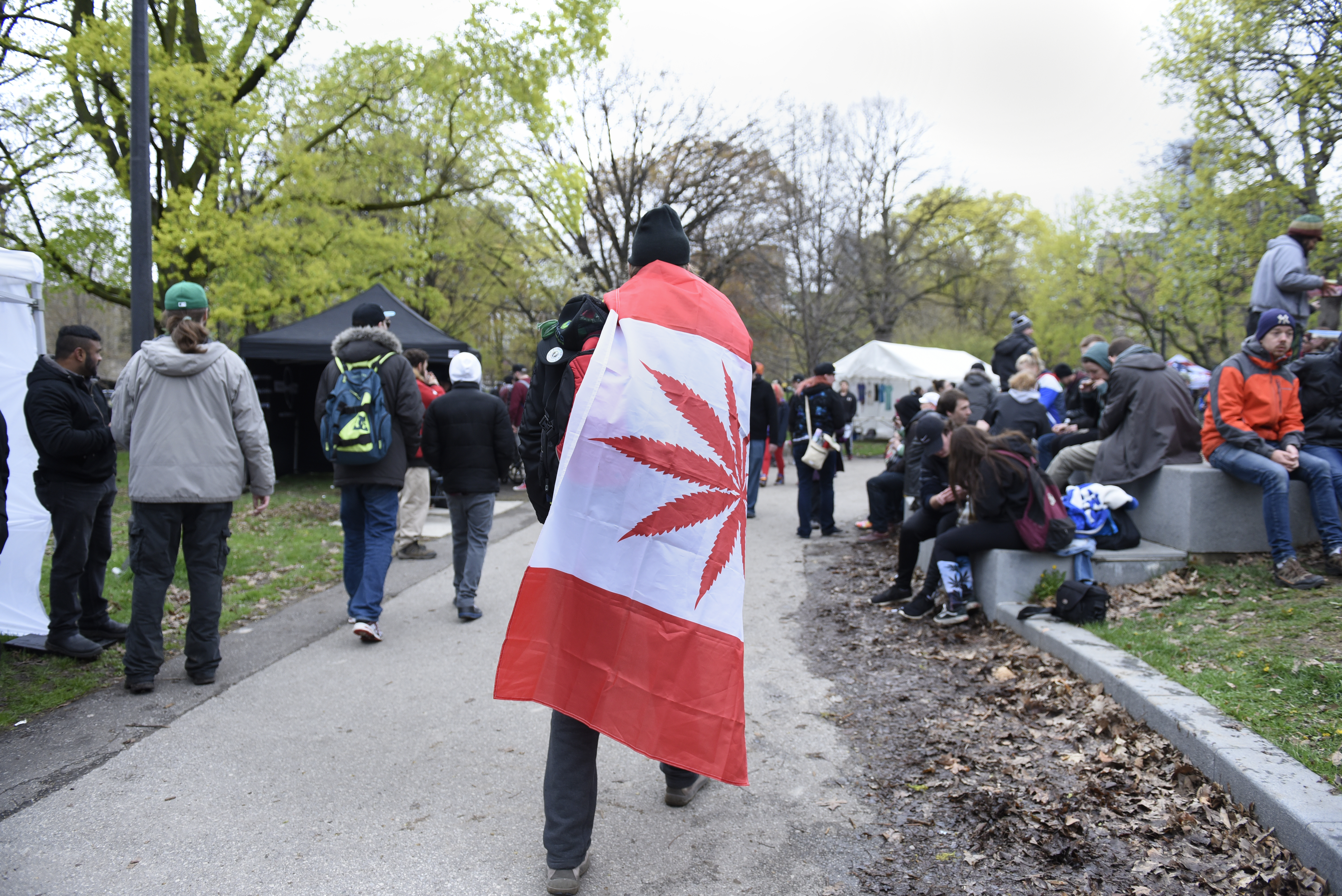 A man walking wrapped with a replica of a Canadian flag where the maple leaf has been replaced by Marijuana leaves during the Global Marijuana March in Toronto.