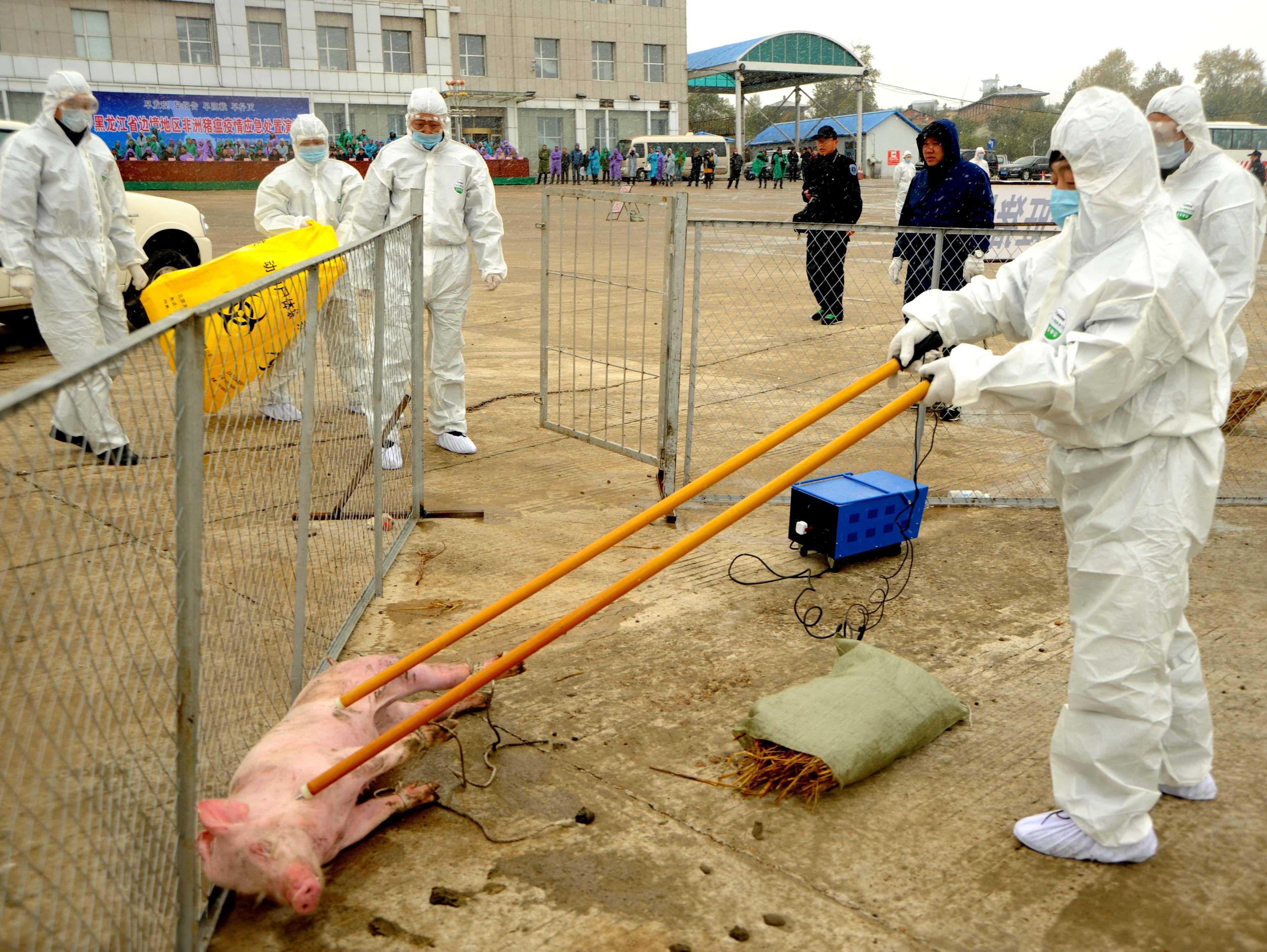 Prevention Exercise Against African Swine Fever Held In Heihe