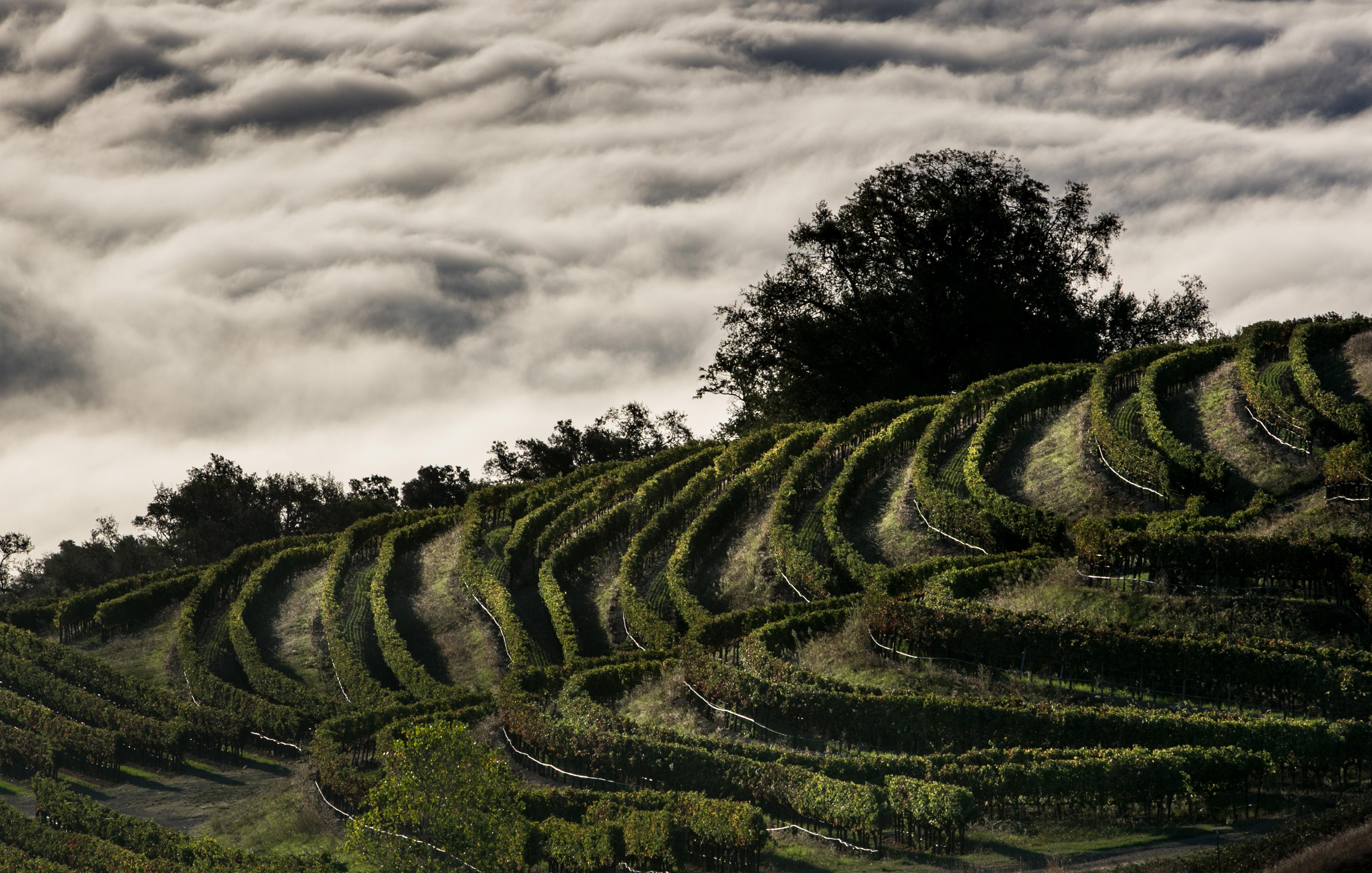 California Wine Grape Harvest Ends