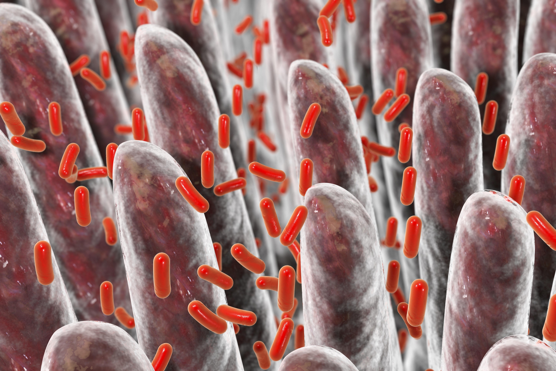 Weight loss diet gut bacteria