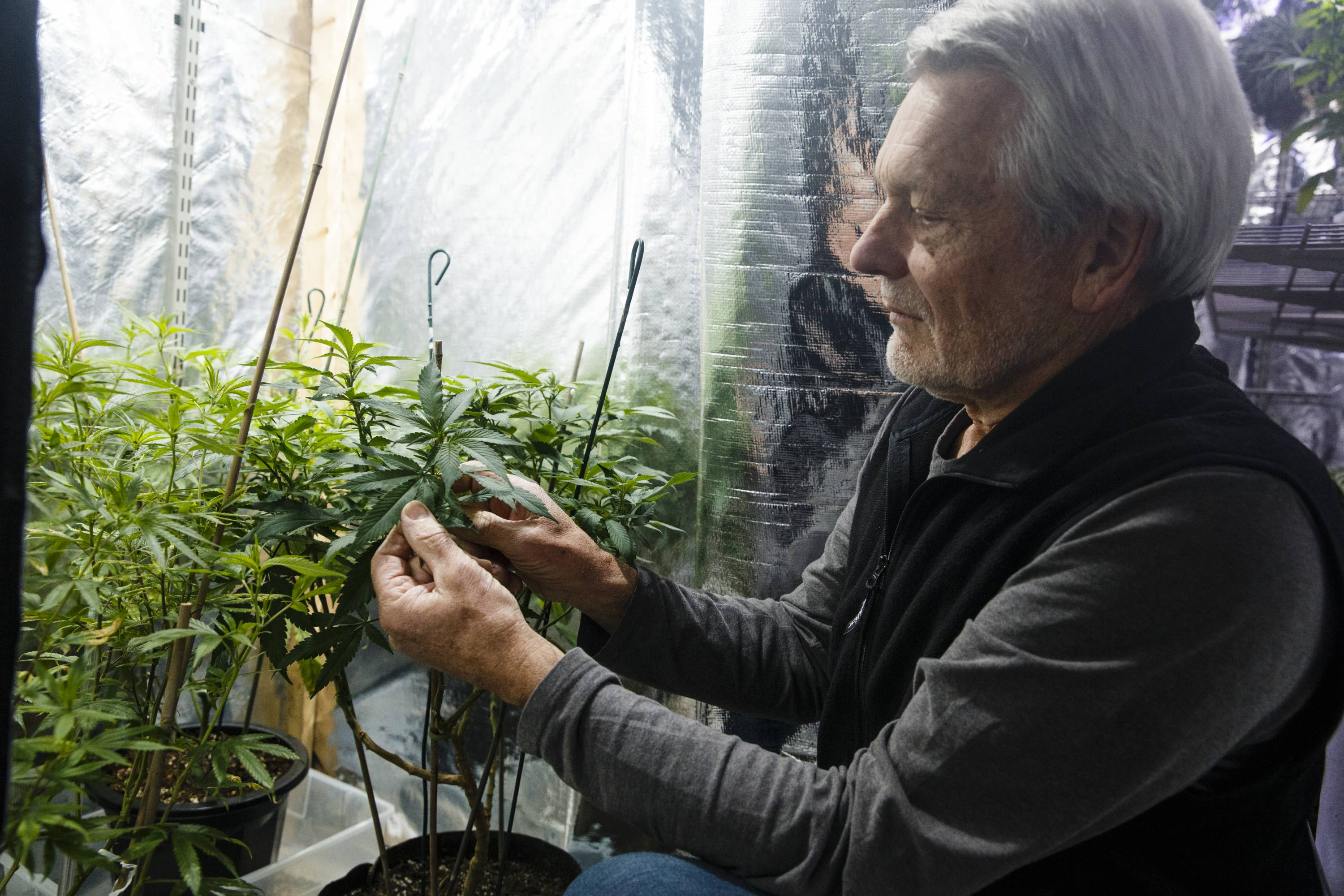With Legal Pot Sales Coming, Baby Boomers Are Ready To Resume The Party