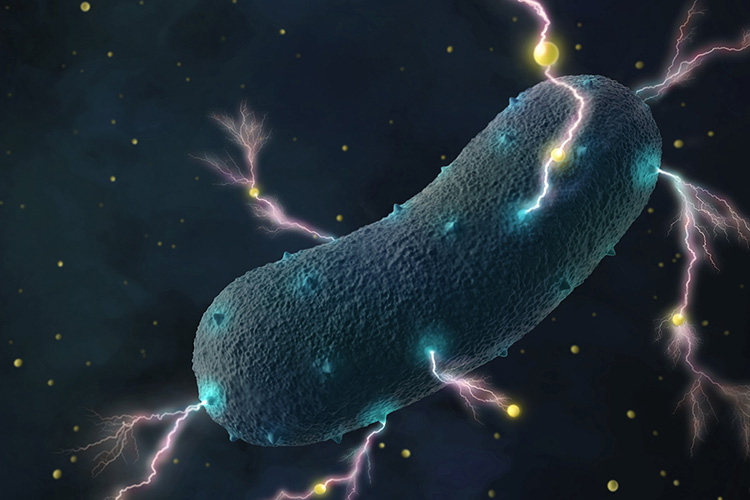 An artist-generated illustration of bacteria transporting electrons through their cell wall into the environment as tiny currents. (Amy Cao graphic, copyright UC Berkeley)
