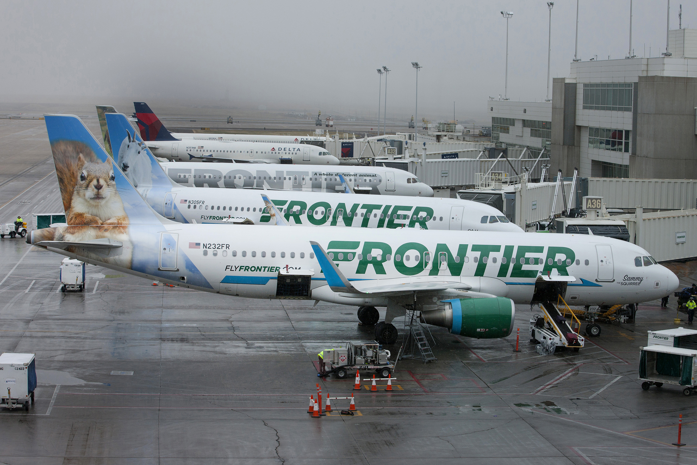 frontier-airlines-squirrel-tail
