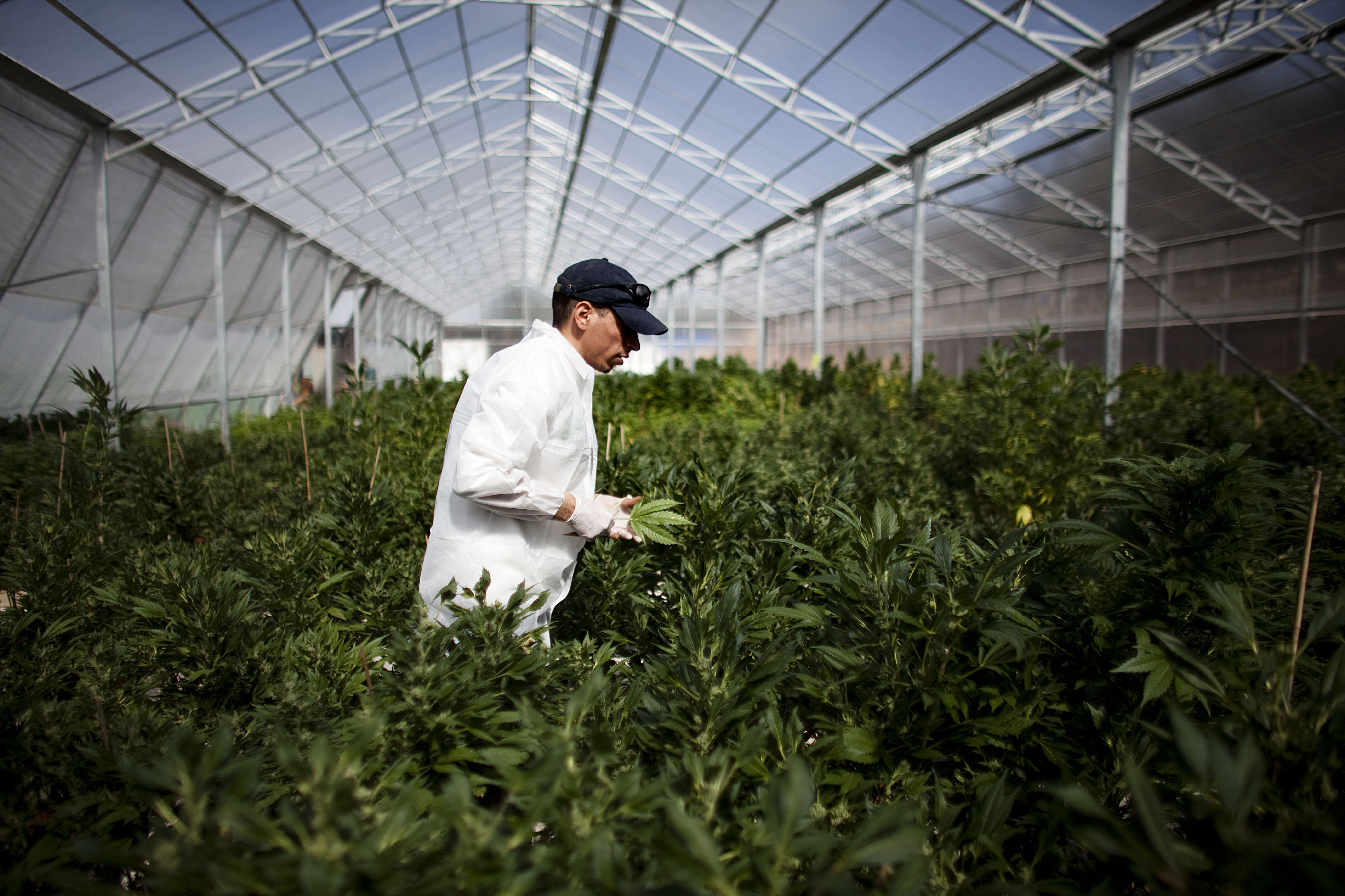 Israel Pioneers Use Of Medical Marijuana