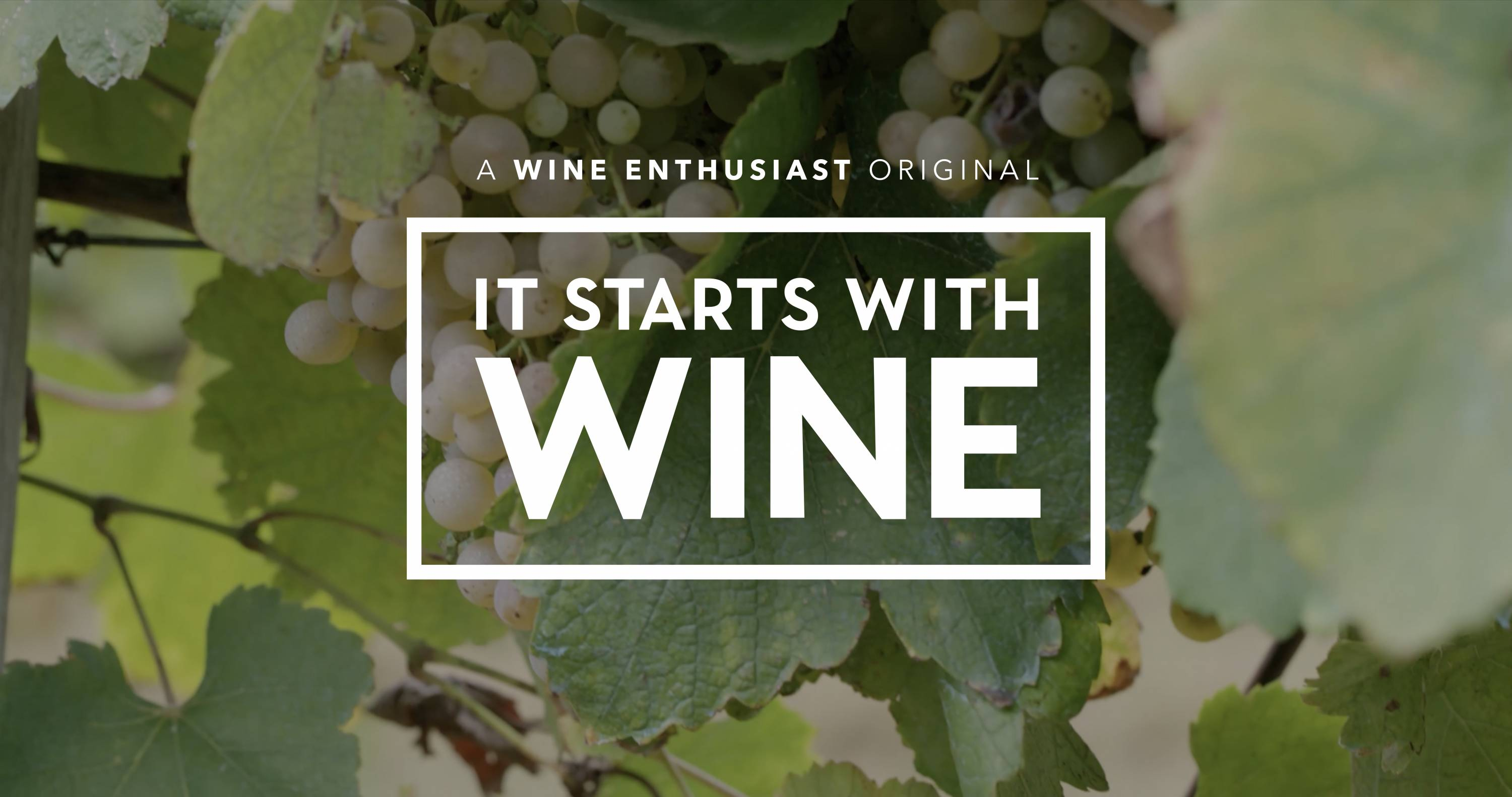 "Amazon's ""It Starts With Wine"""