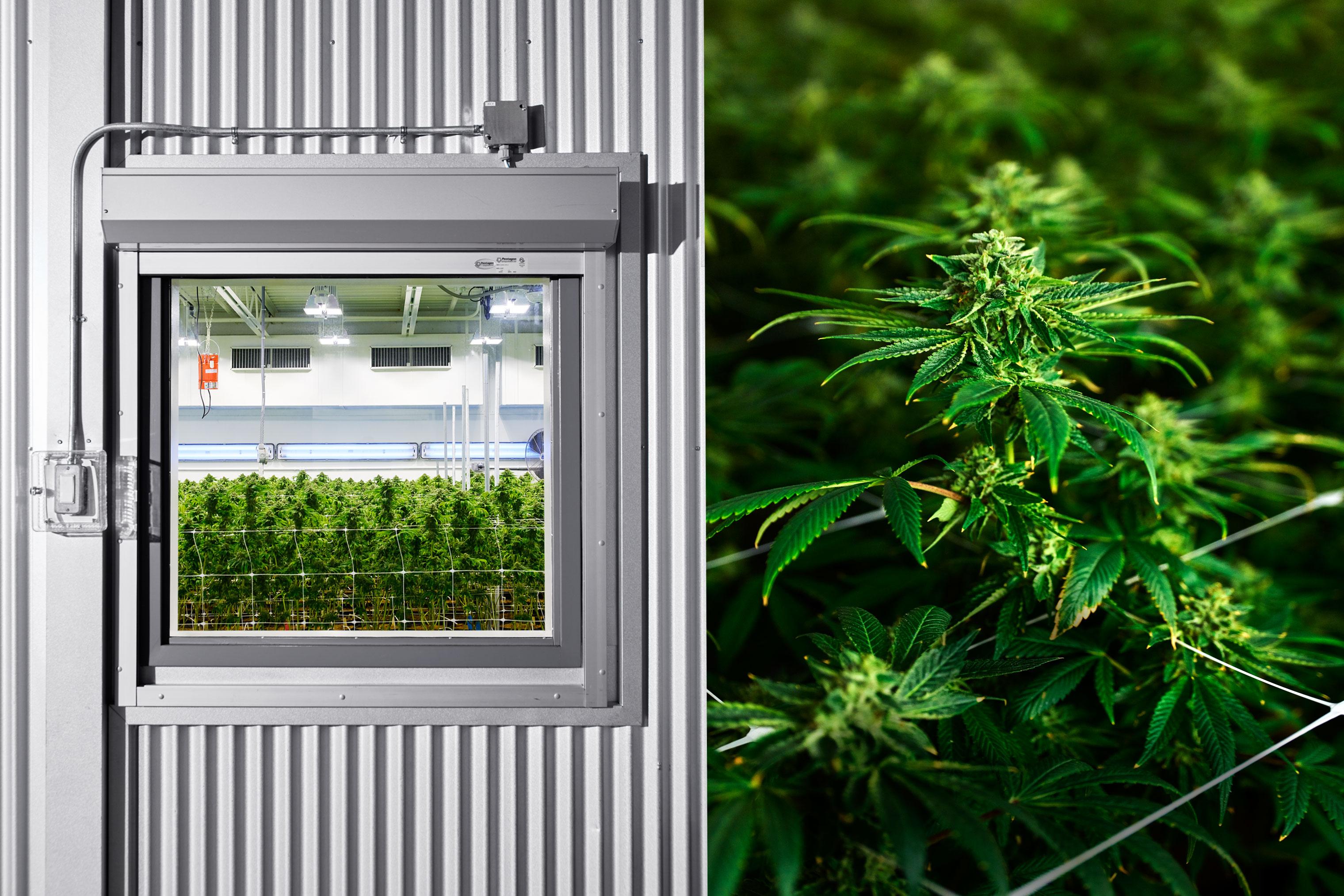The Marijuana Billionaire Who Doesn't Smoke Weed | Fortune