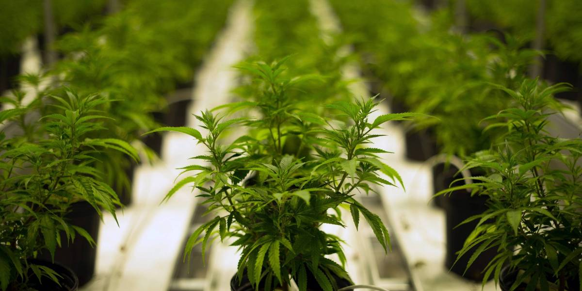 Investors Are Pouring Money Into Marijuana Software. Here's the Latest Startup to Get Funding