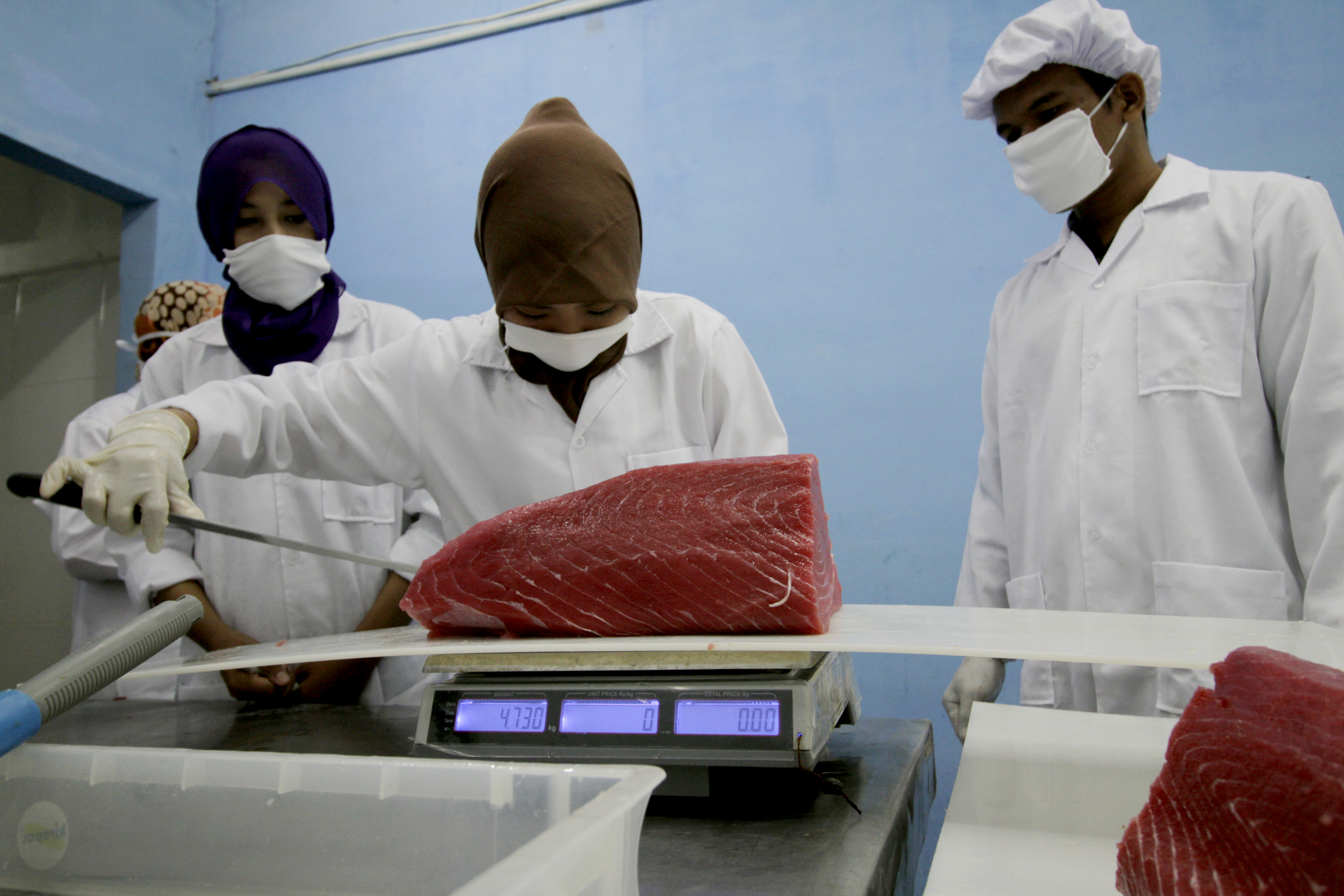 Workers Process Tuna Fish For Export In Indonesia