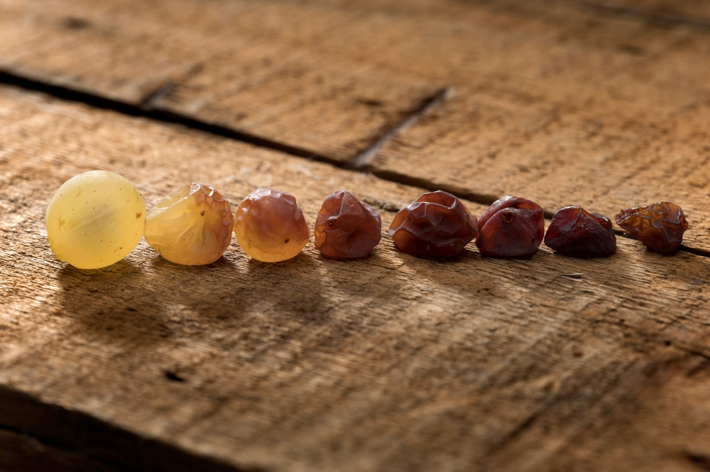 Tokaji esszencia-dried grapes