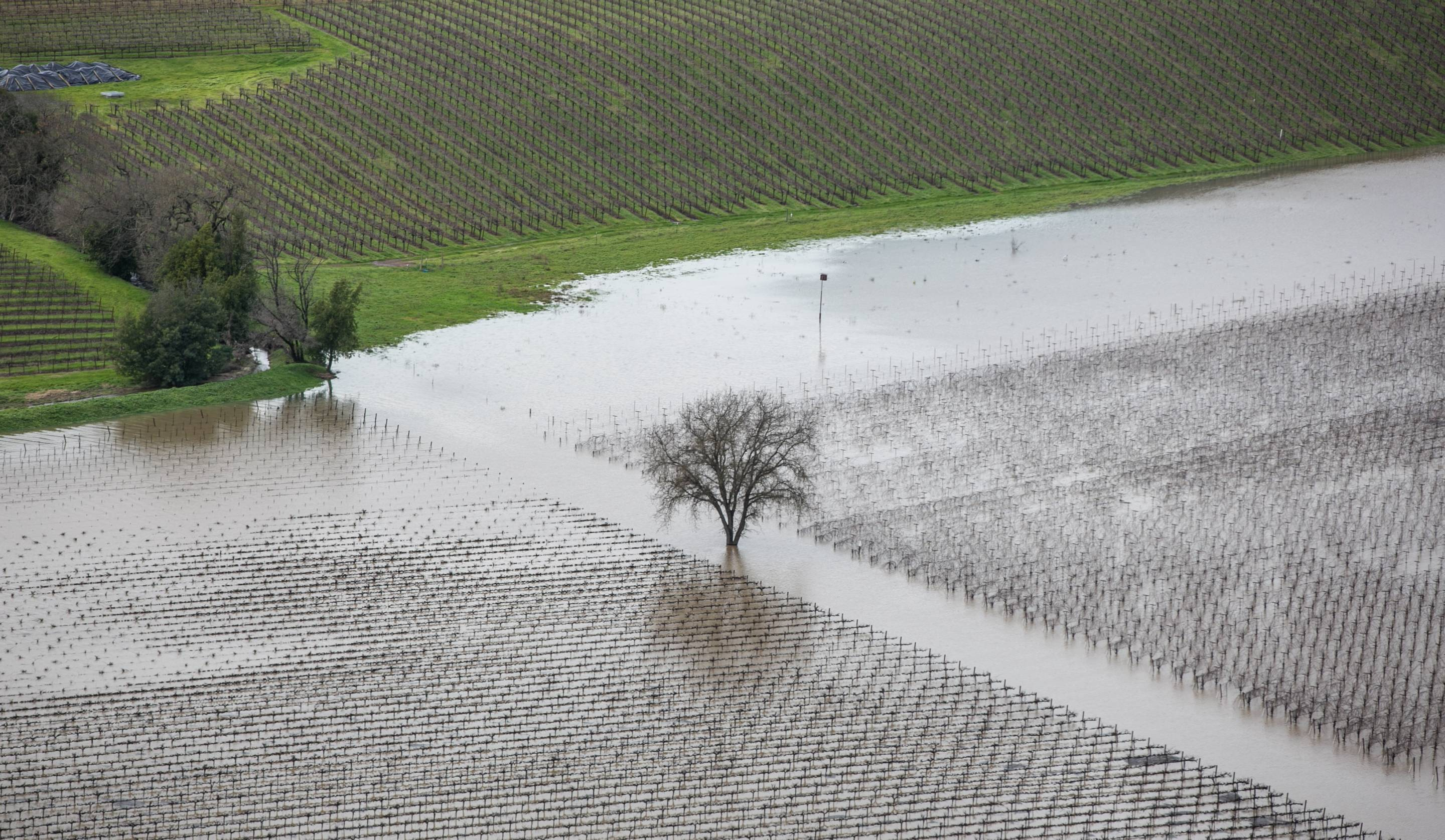 Vineyards and farmland are inundated by widespread flooding.