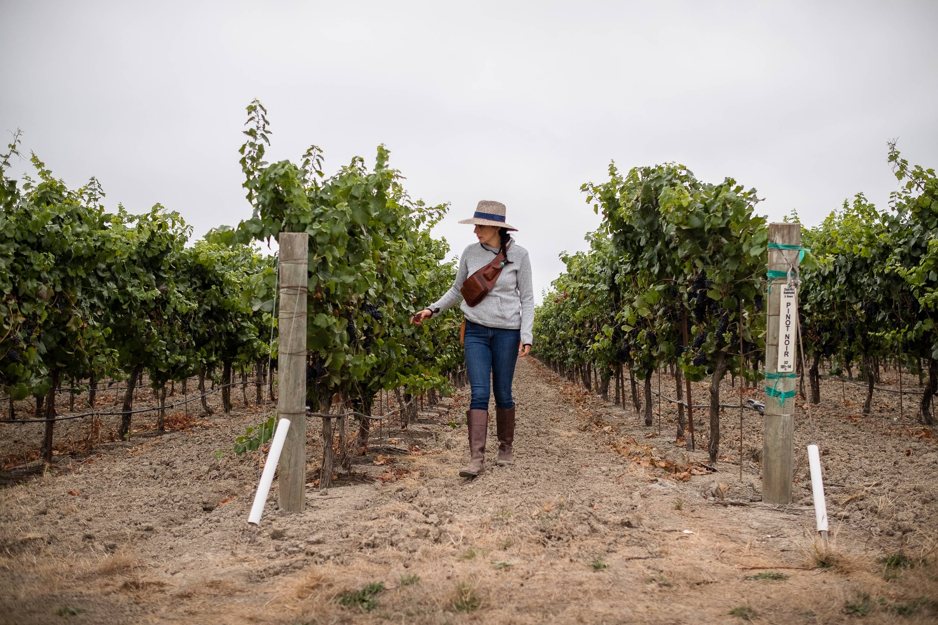 A new PBS documentary goes behind the scenes of Northern California's wine industry to show the influence and involvement of Latinos at all levels of the winery business.
