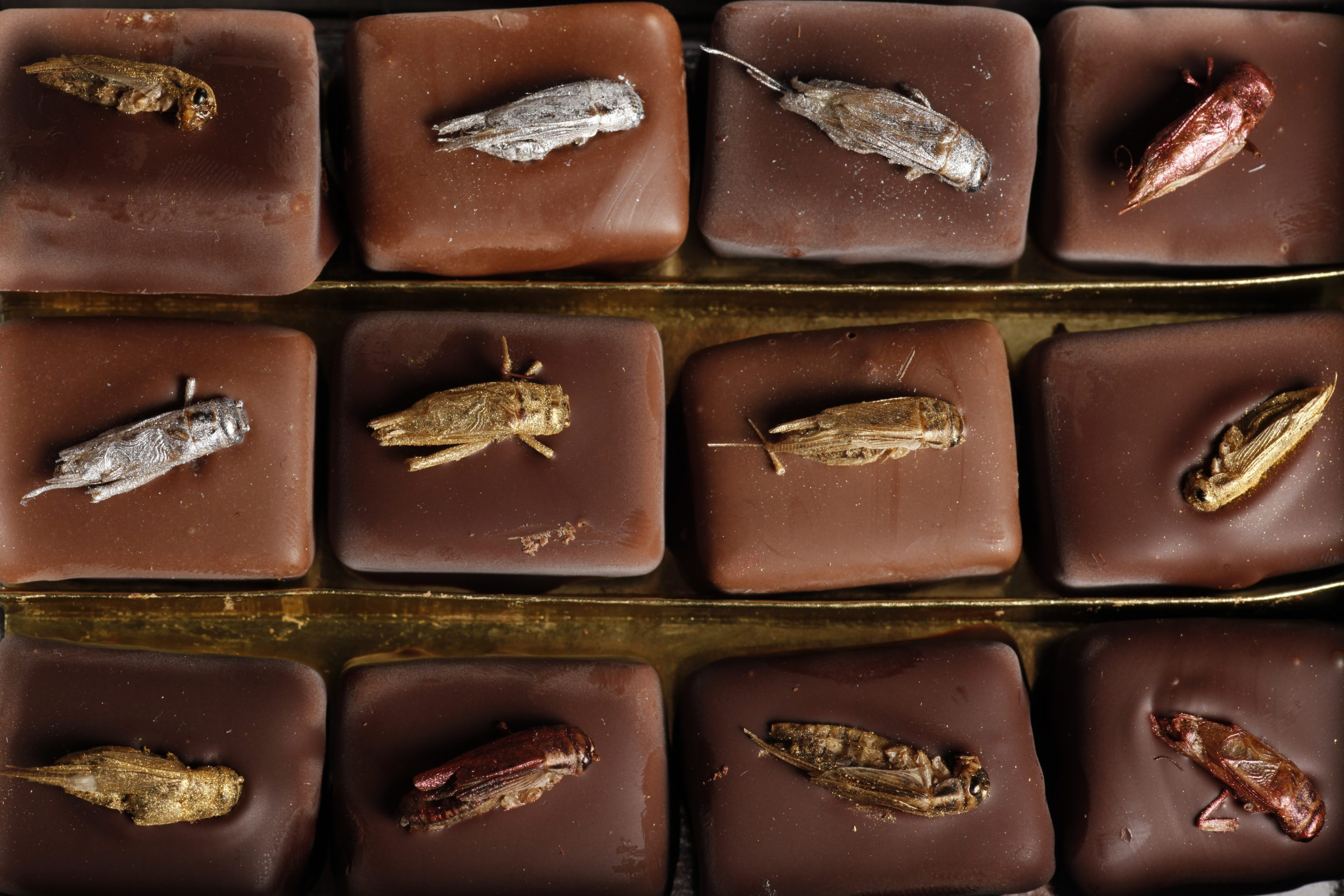 The Rise of Insect Based Foods In Our Diet