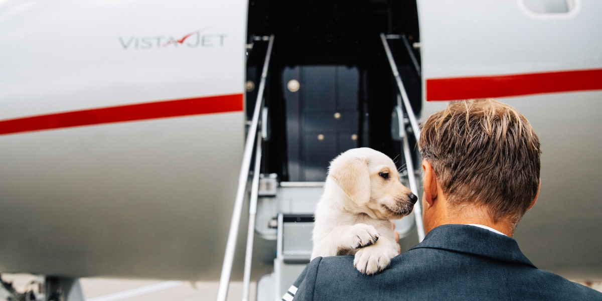 Tips and Treats for Stress-Free Travel With Pets