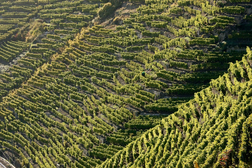 Dautel-German Wines-Vineyards-wide