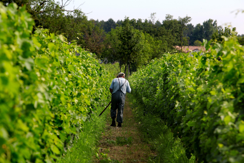 French Winery Vineyard Farmer Bordeaux