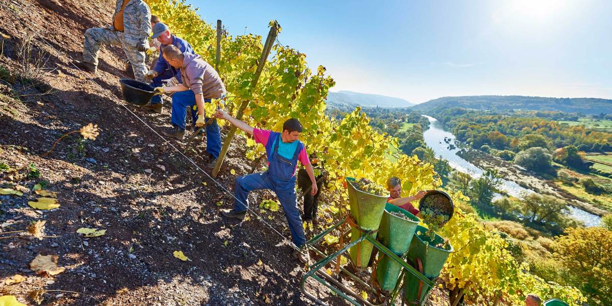 German Winemakers Are Hoping for a Revival With a Return to Drier Wines