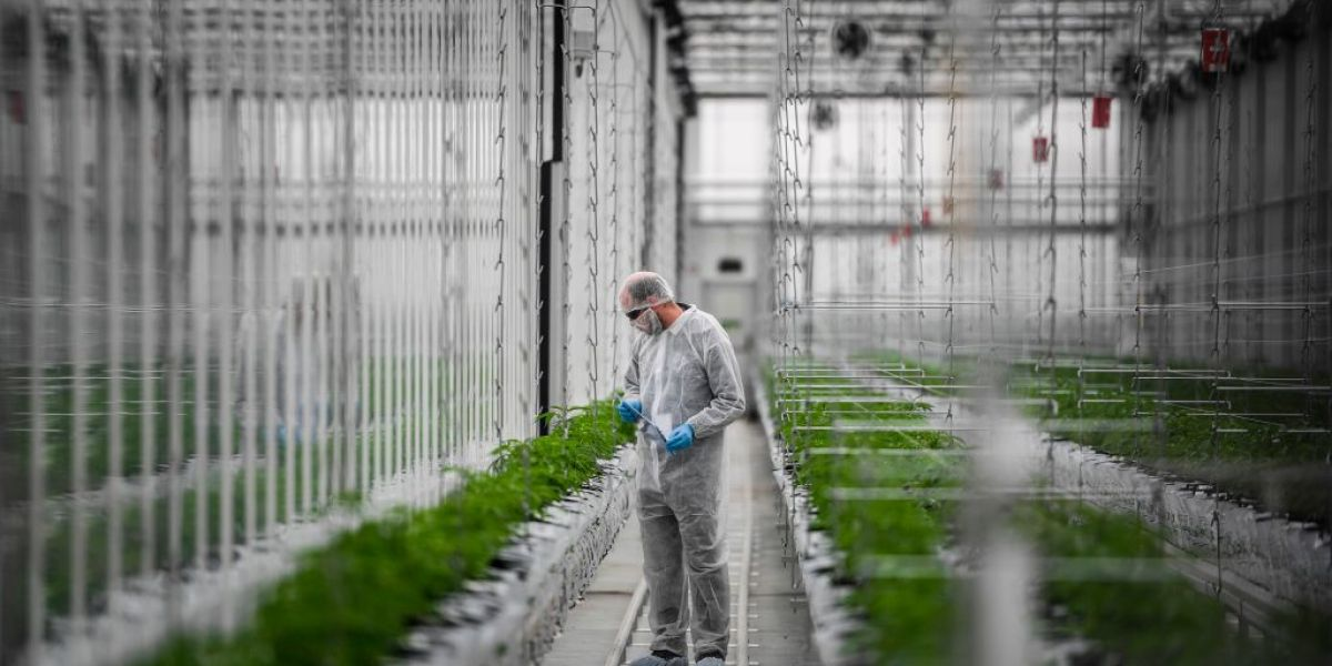 As Europe's Cannabis Industry Opens Up, Established Canadian Companies Are Pouncing