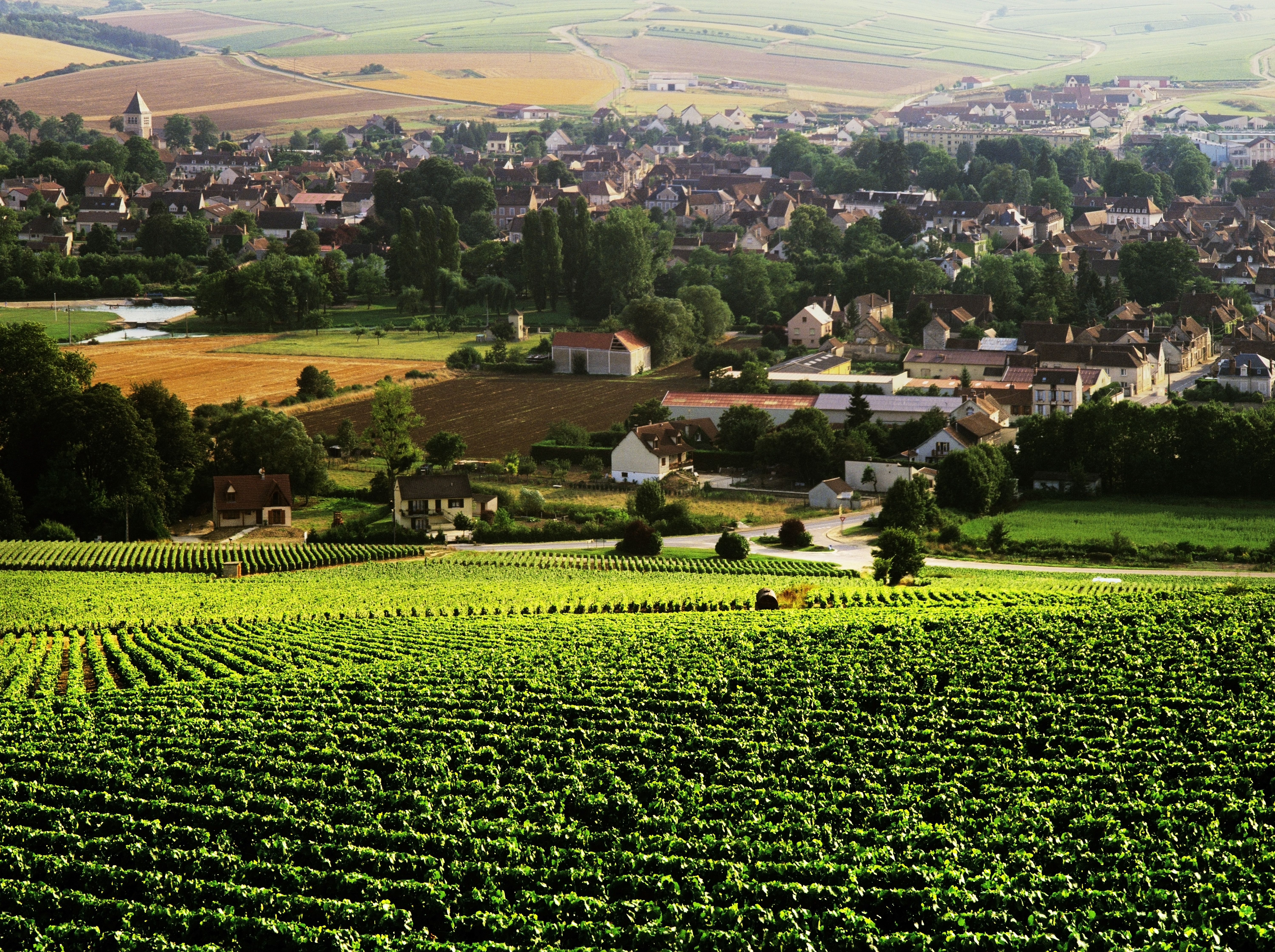 Vineyards surrounding the village of Chablis in the French region of Burgundy.