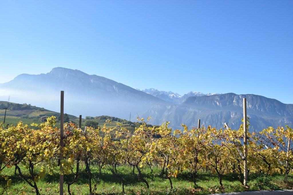 Trentodoc-Cambra-Valley