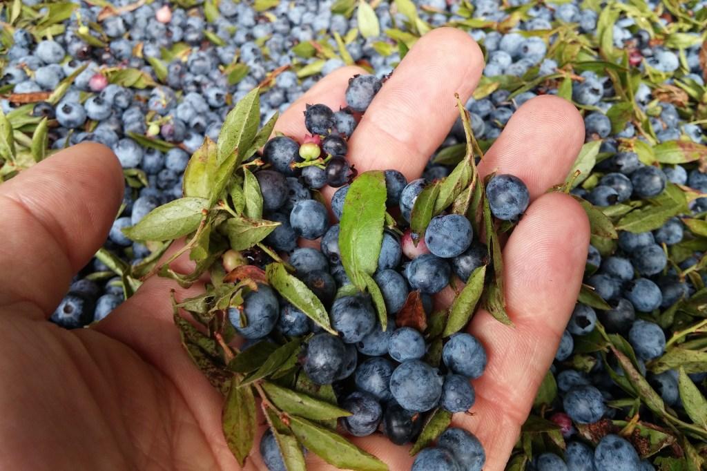 Fruit Wine-Bluet-Blueberries