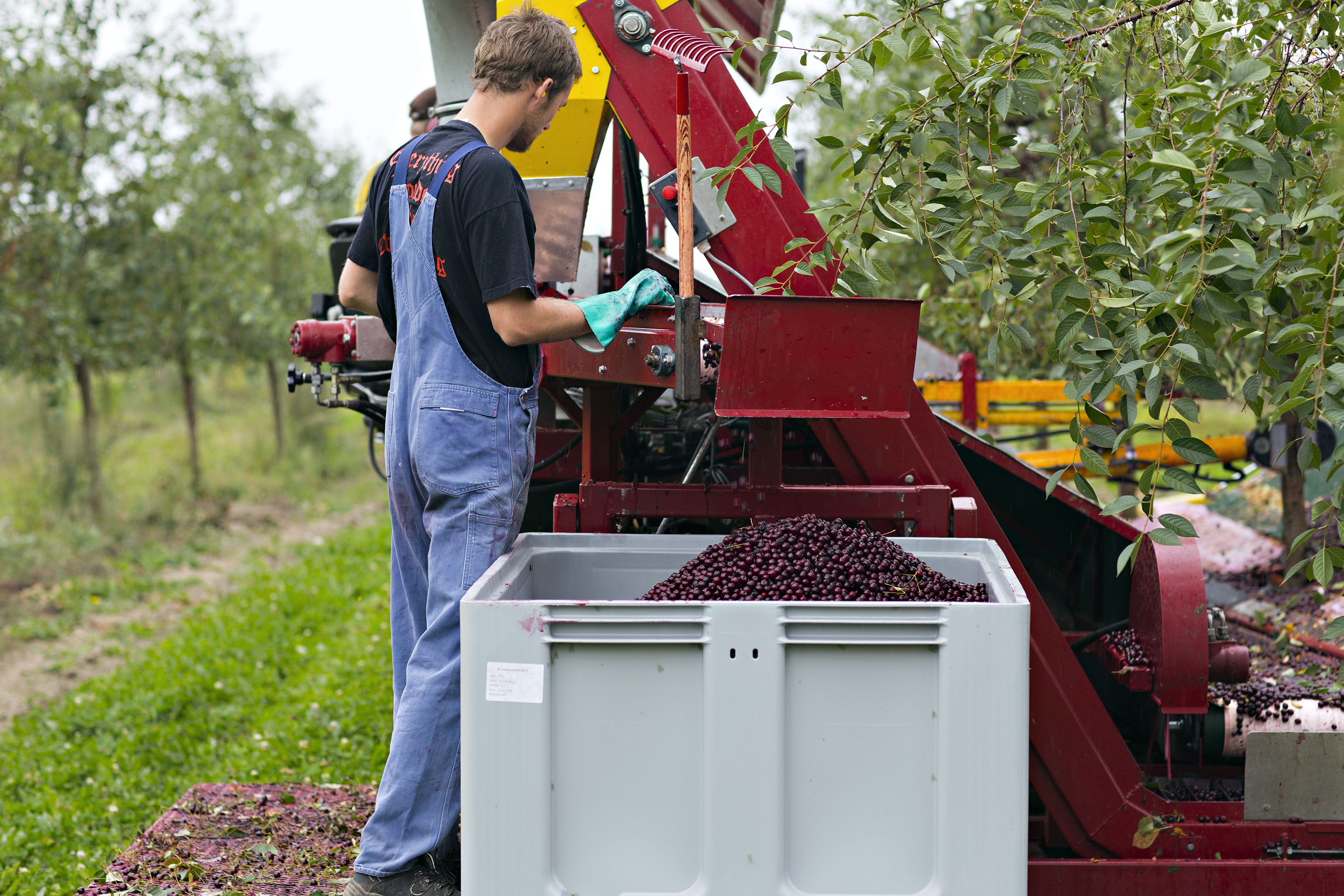 Fruit Wine-Frederiksdal-Harvest