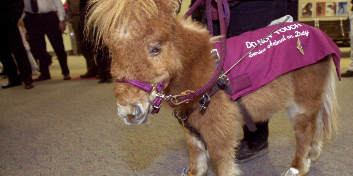 DOT Clears Pit Bulls, Miniature Horses to Fly as Service Animals
